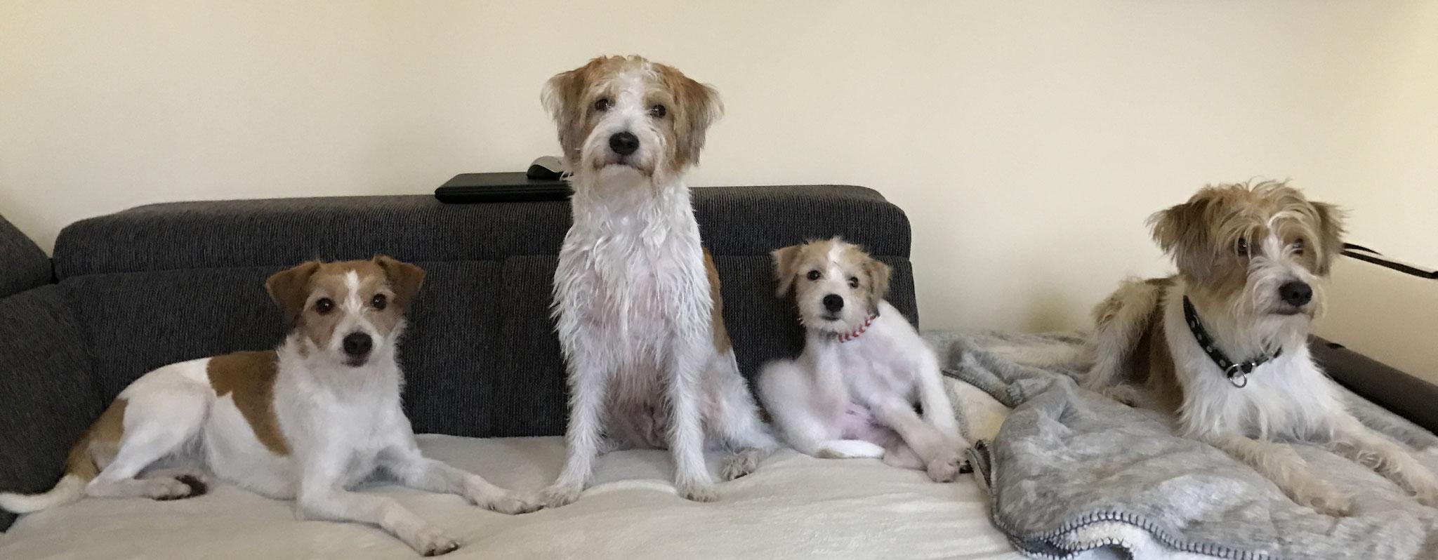 11 Wochen alt mit Schwester Avanti 3,5 Jahre ,Mama Happy 6 Jahre und Bruder Branko fast 2 Jahre