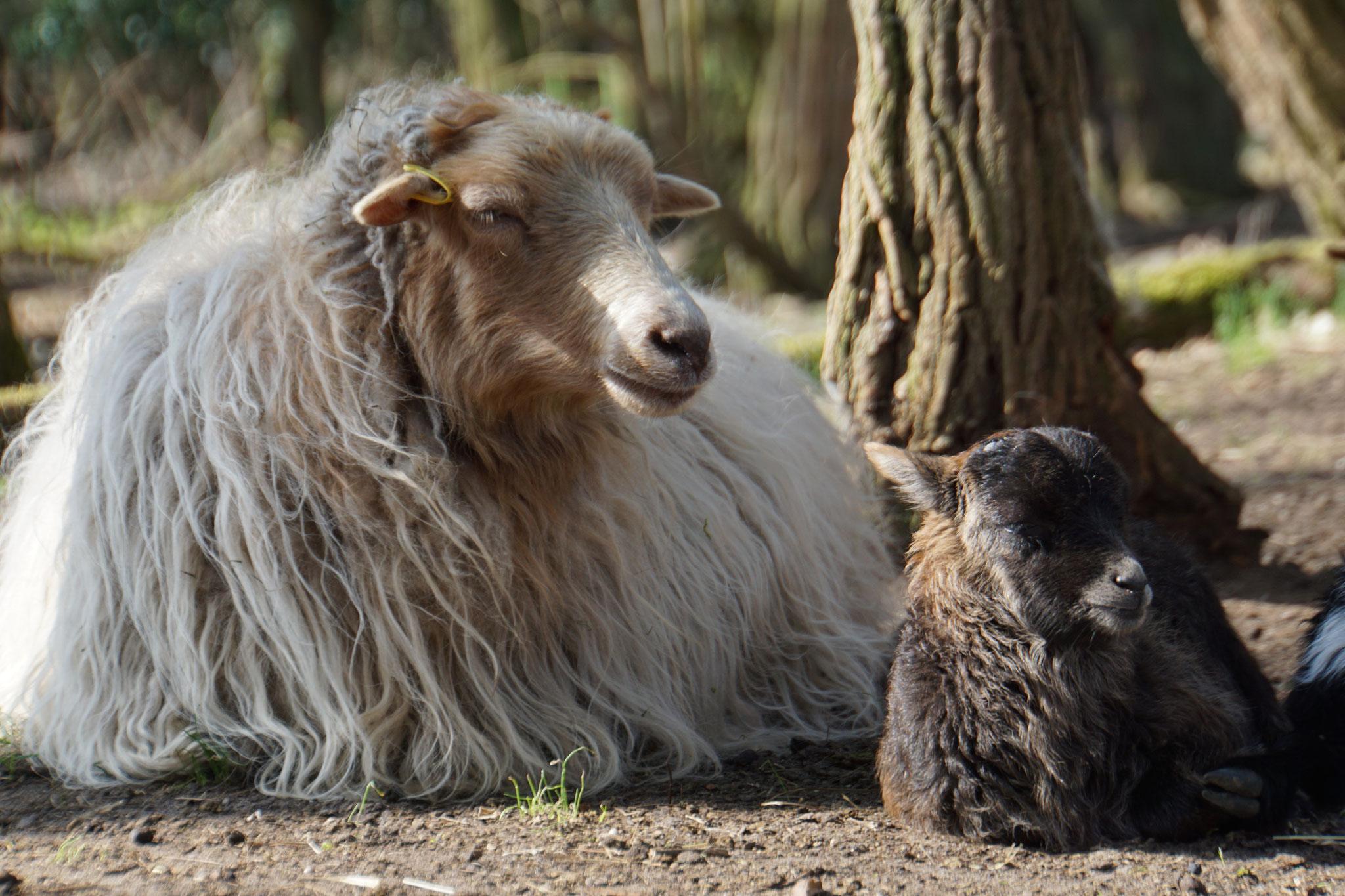Rufus * 31.03.2018 Mutter: Freya, Vater: Peppi