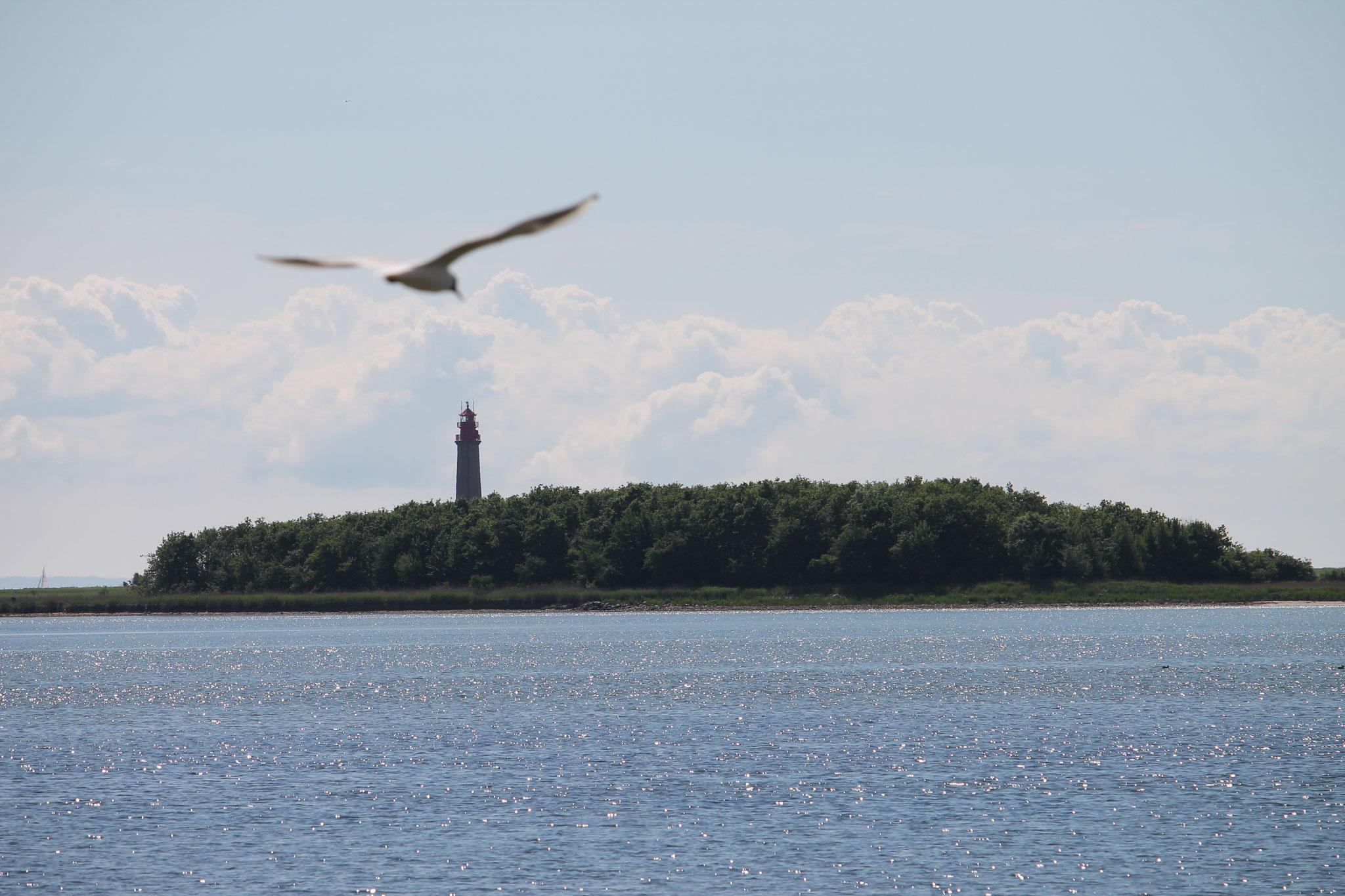 Leuchtturm Flügge mit Möwe
