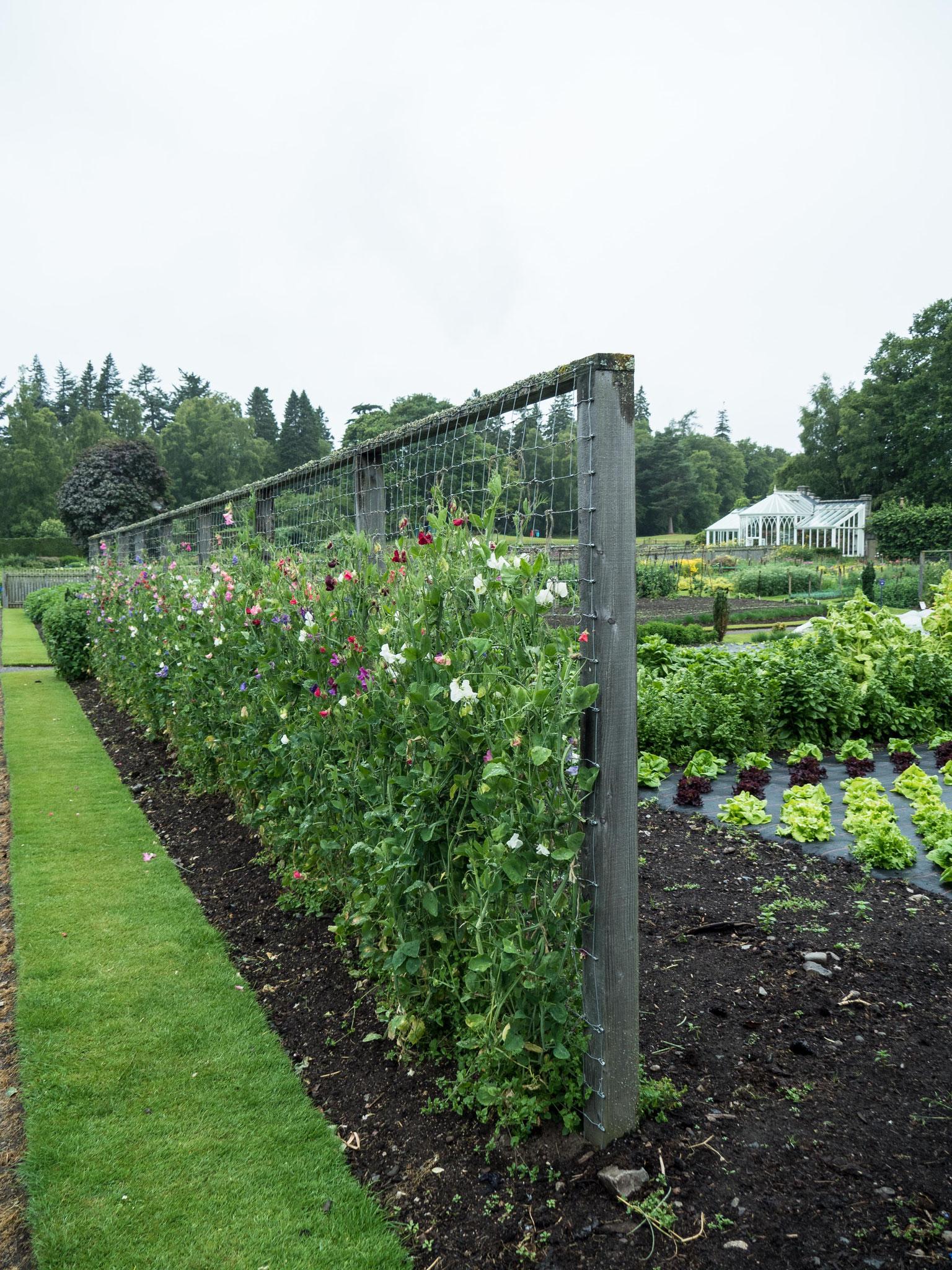 Bild: Balmoral - Gartenanlagen