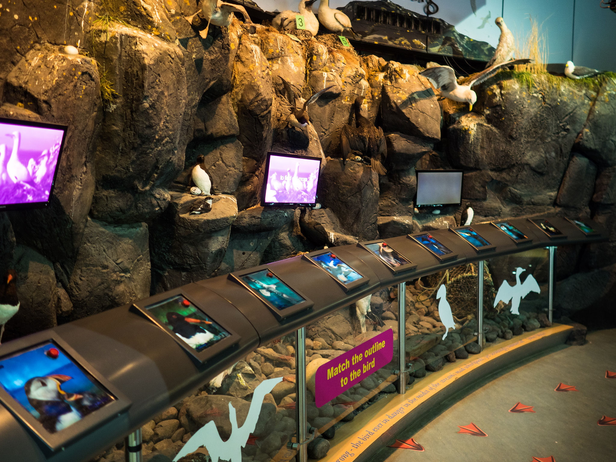 Bild: Scottish Seabird Centre