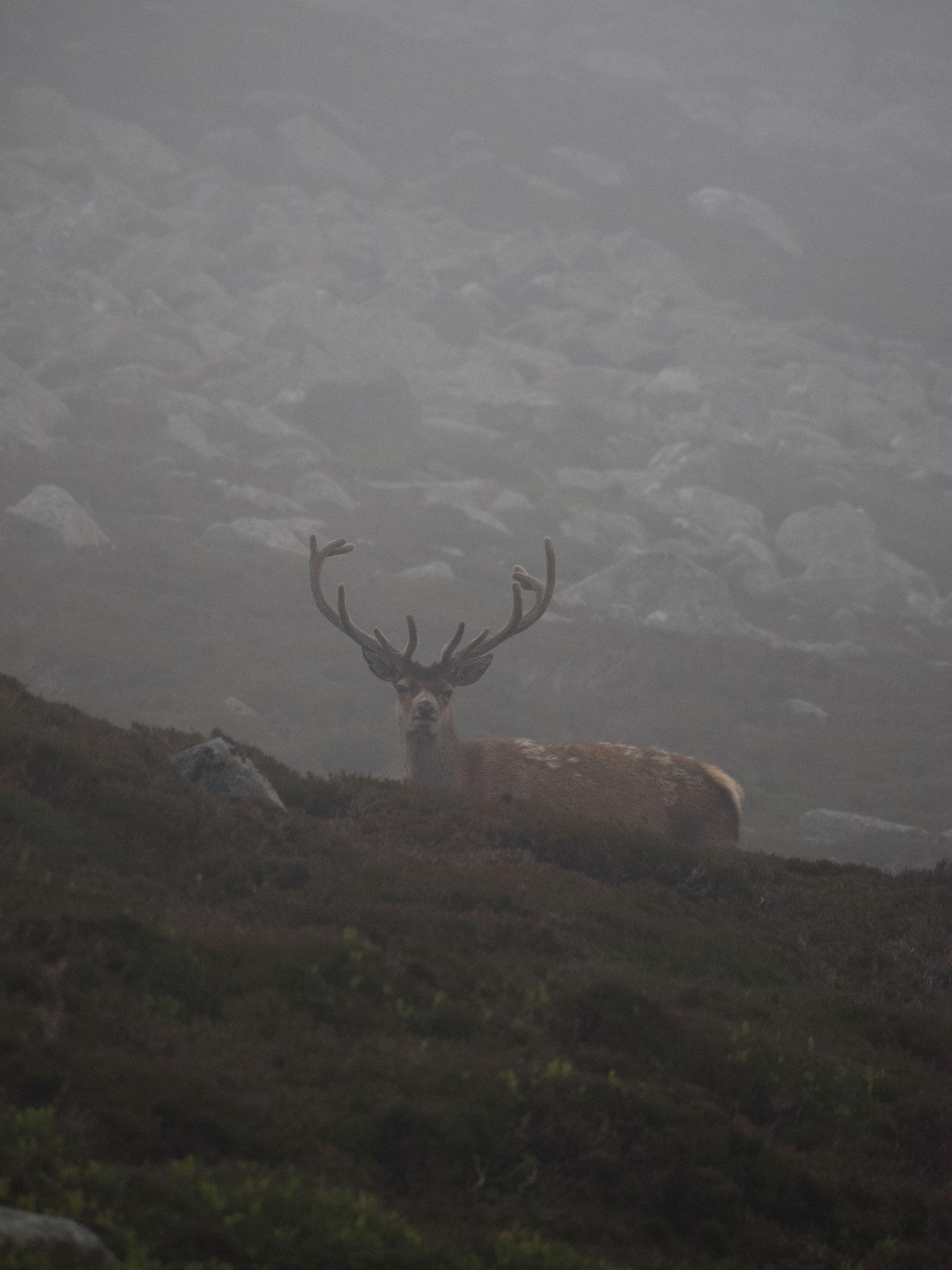 Bild: ein prächtiger Hirsch