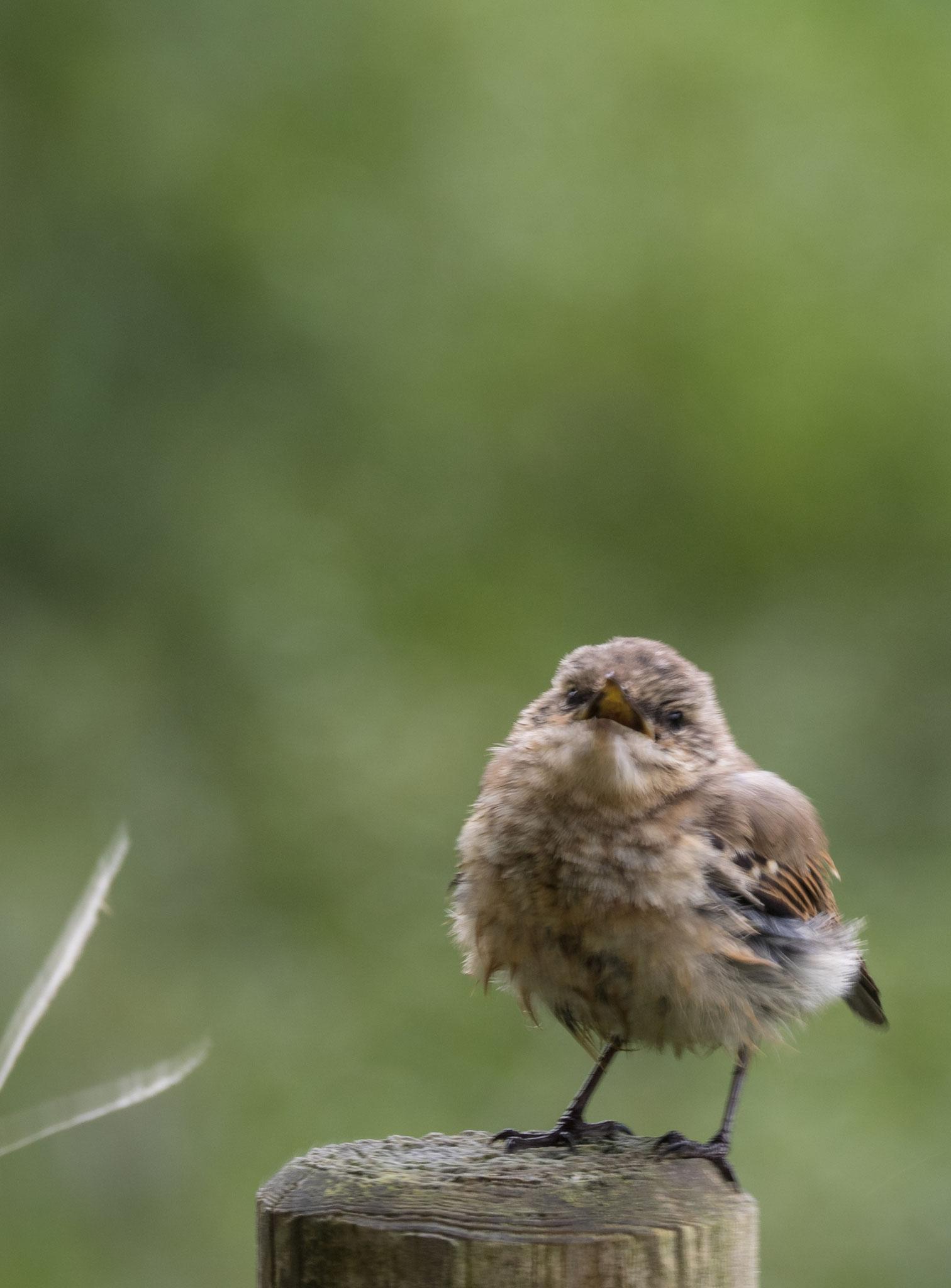 Bild: Vogel