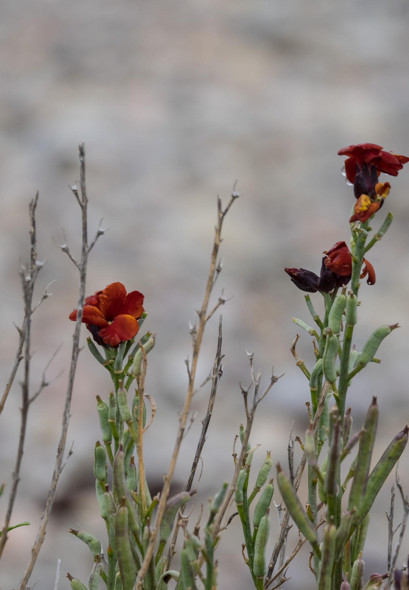 Bild: Blumen am Spey Bay
