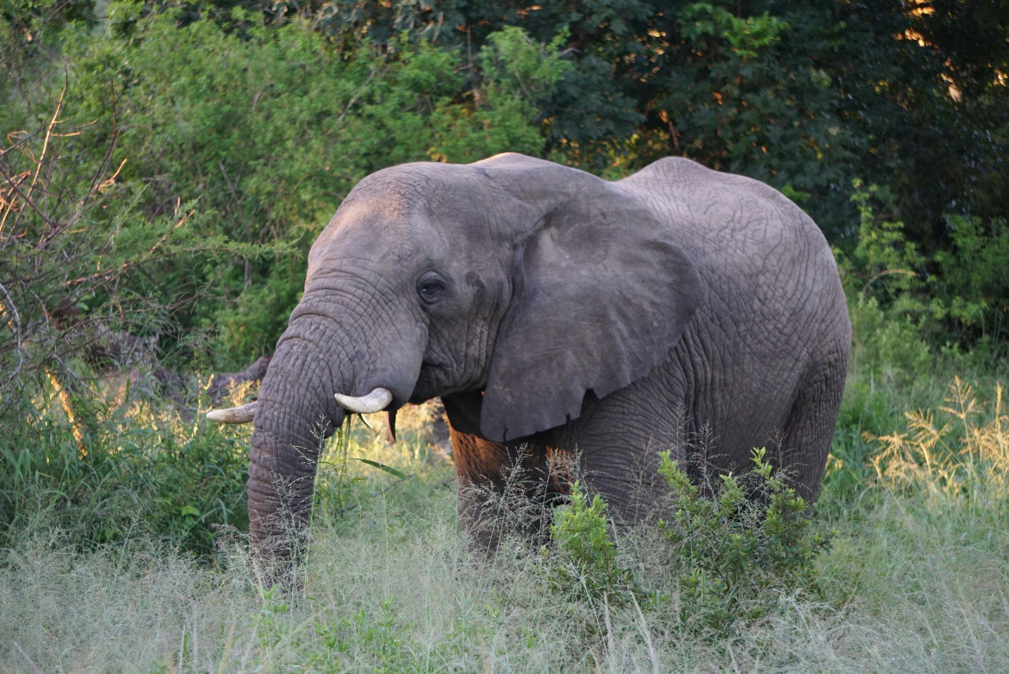 Bild: Elefant