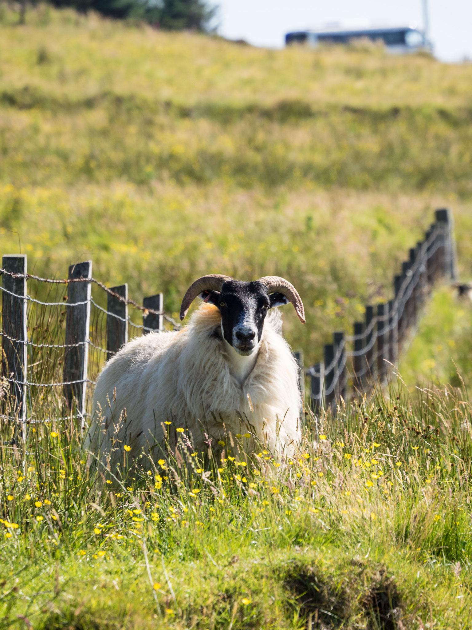Bild: Isle of Skye