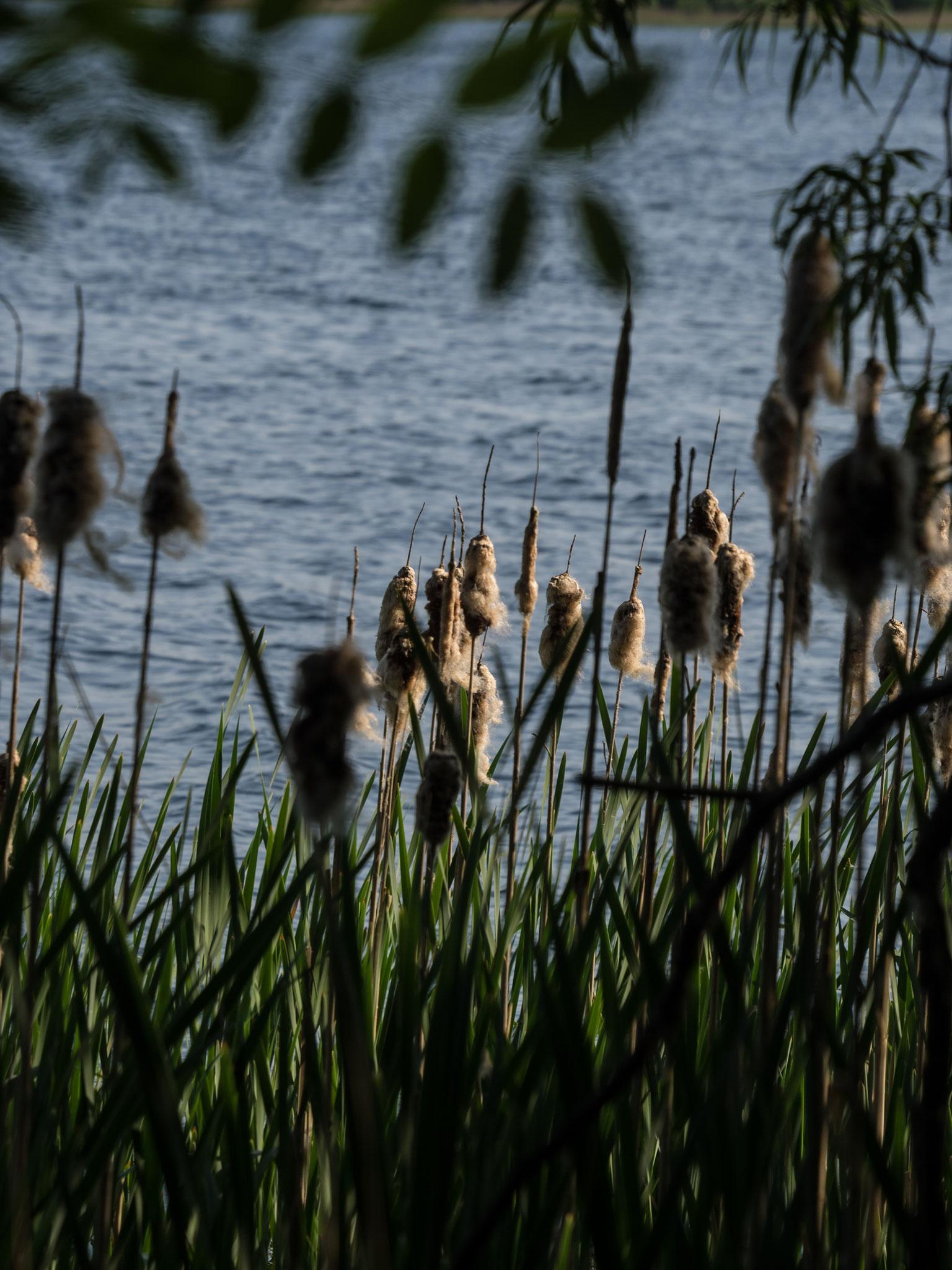 Großer Segeberger See
