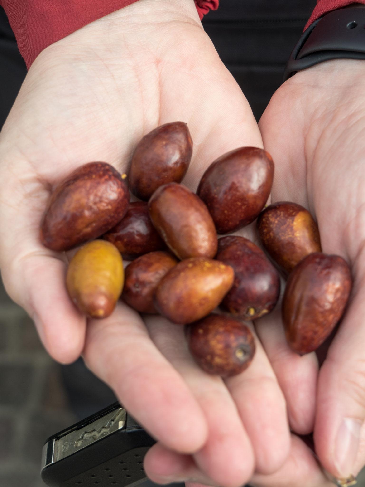 Jujube Früchte