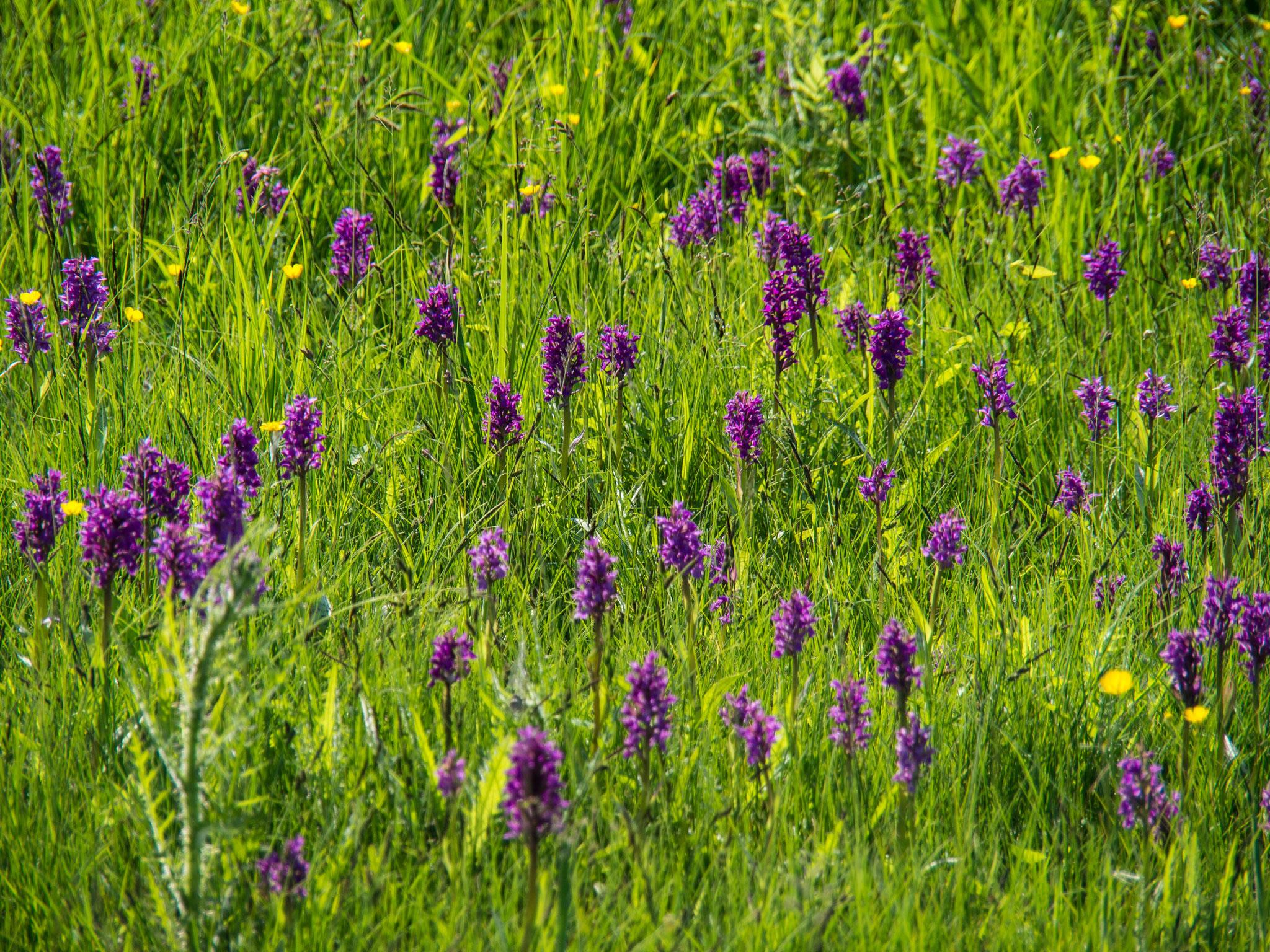 OrchideenHau