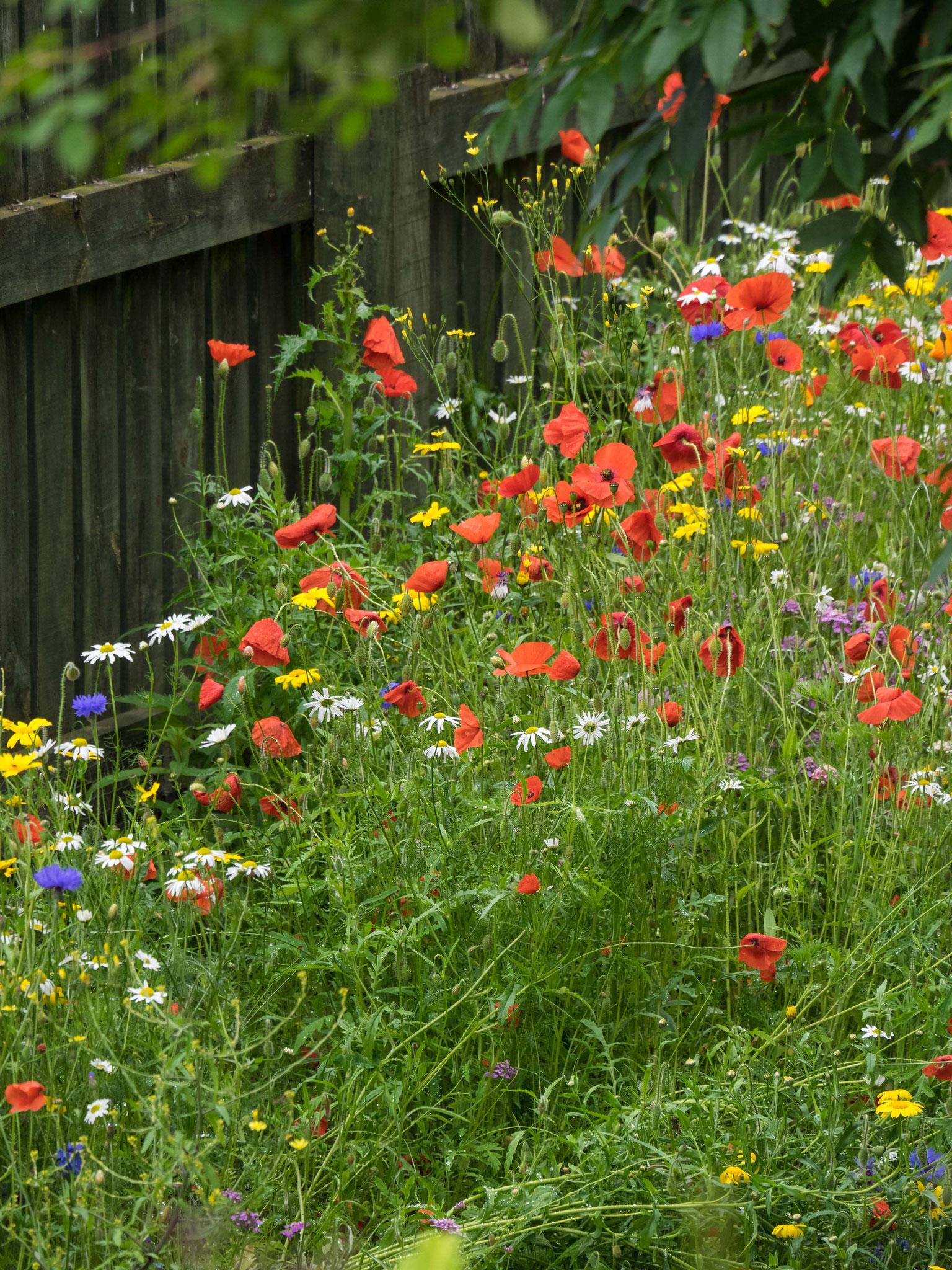 Bild: Blumen
