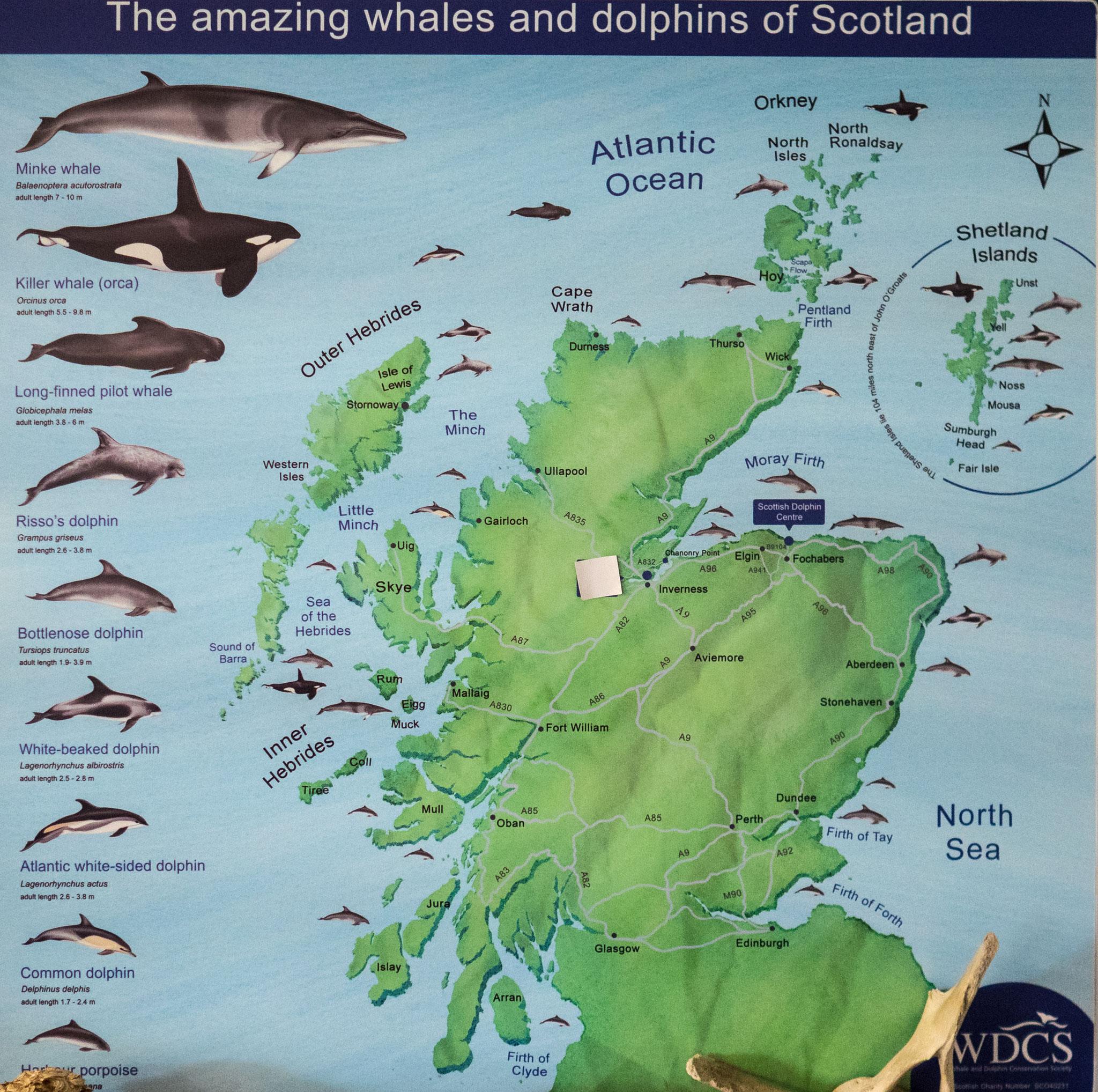 Bild: Schottland's Wale und Delphine