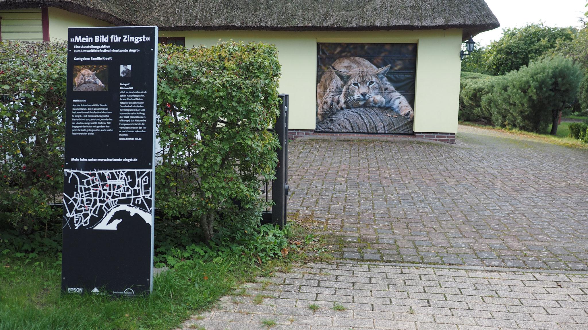 Ausstellungsaktion Mein Bild für Zingst