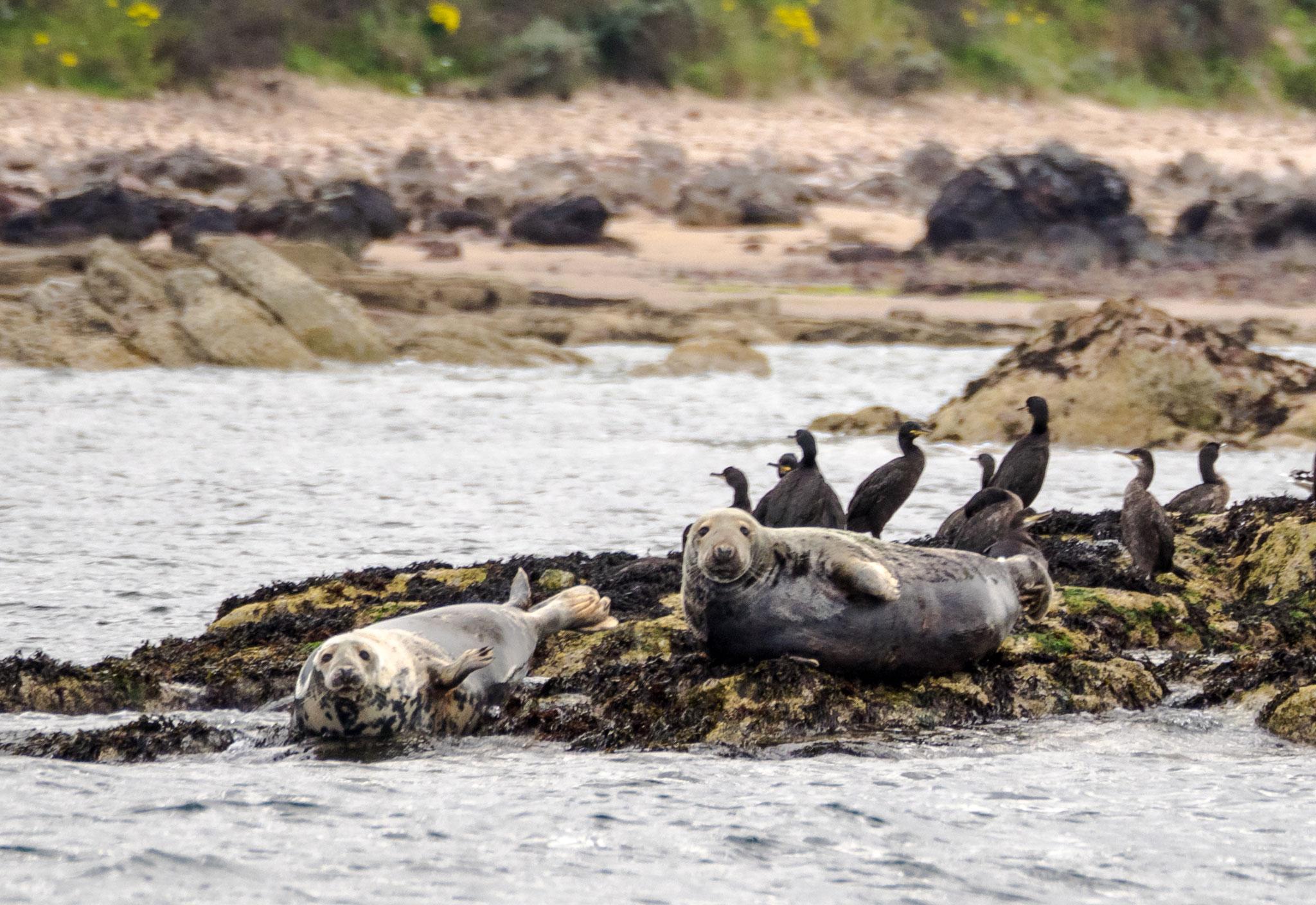 Bild: Seehunde