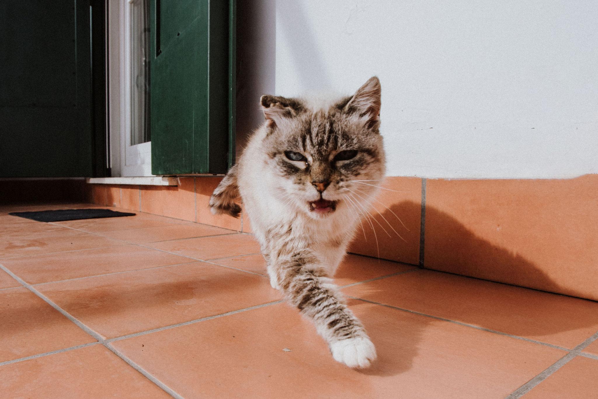 Cat Amalfi Coast