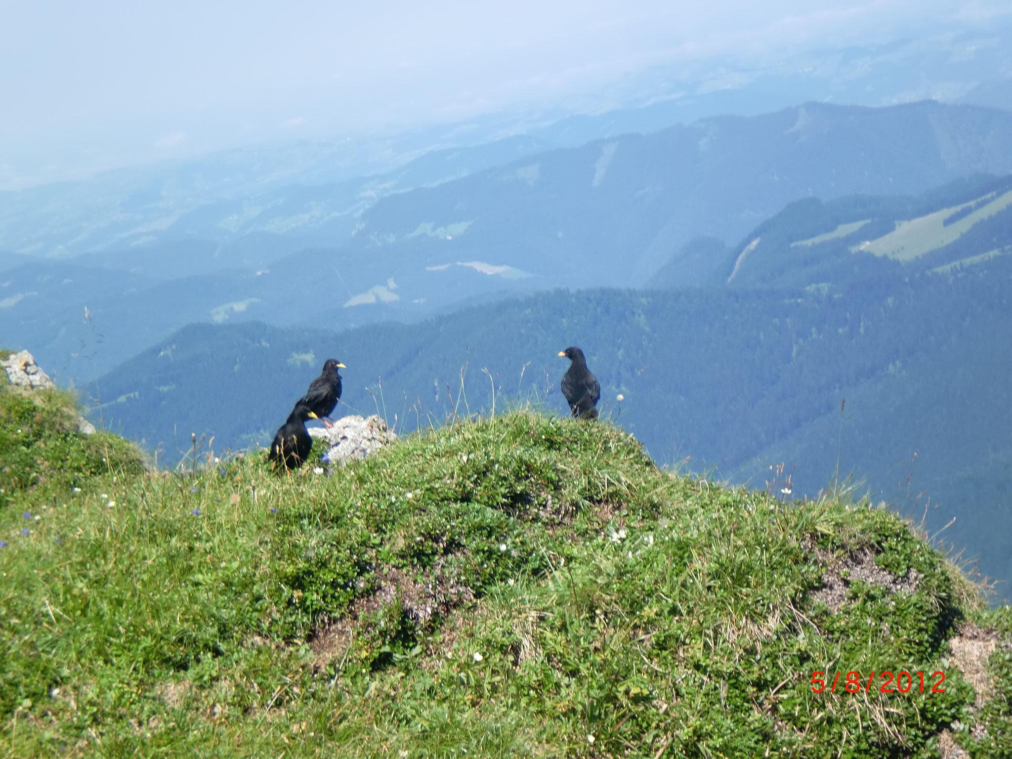 Bergdolen am Ötscher