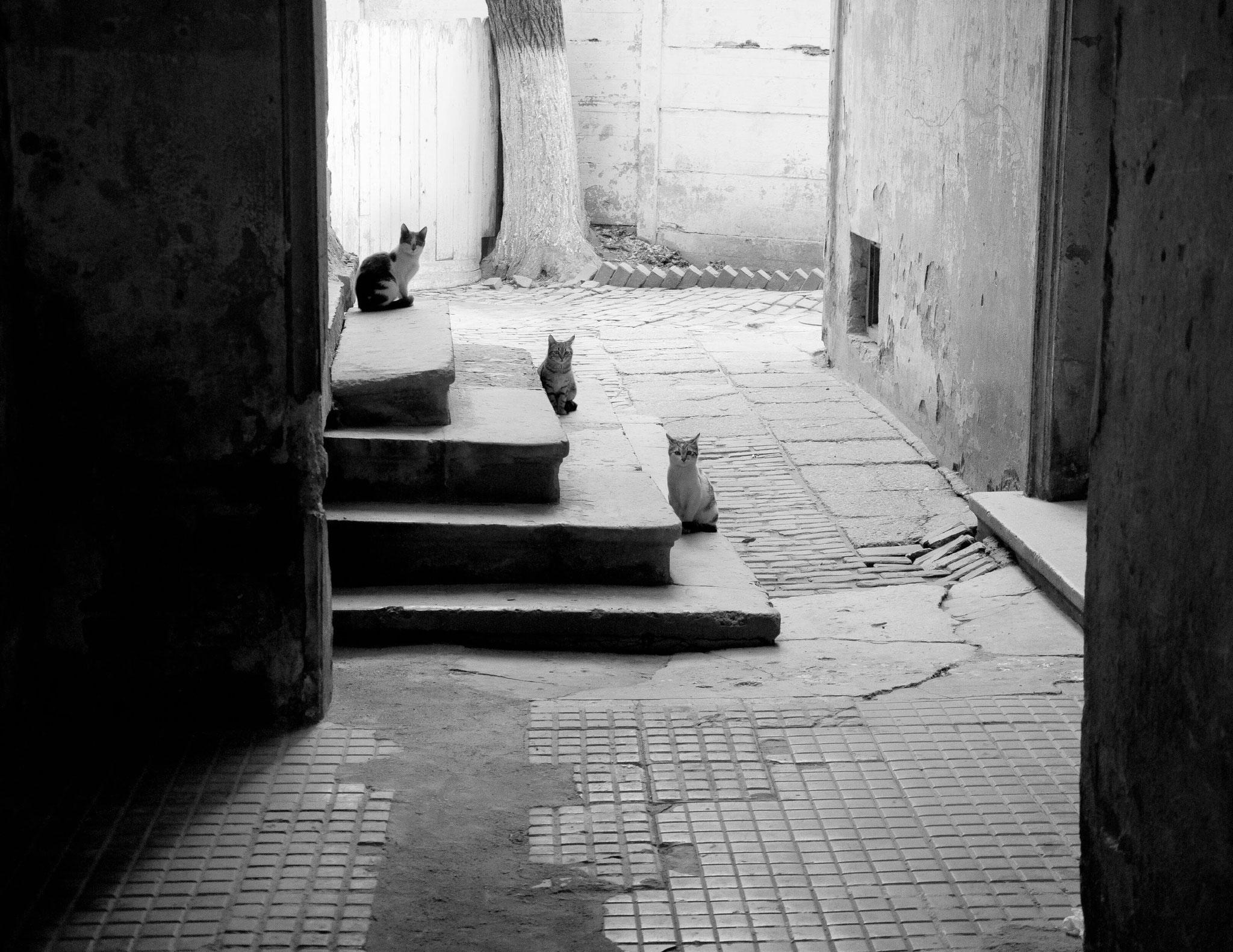 Cornel Hlupina (Romania) - Waiting