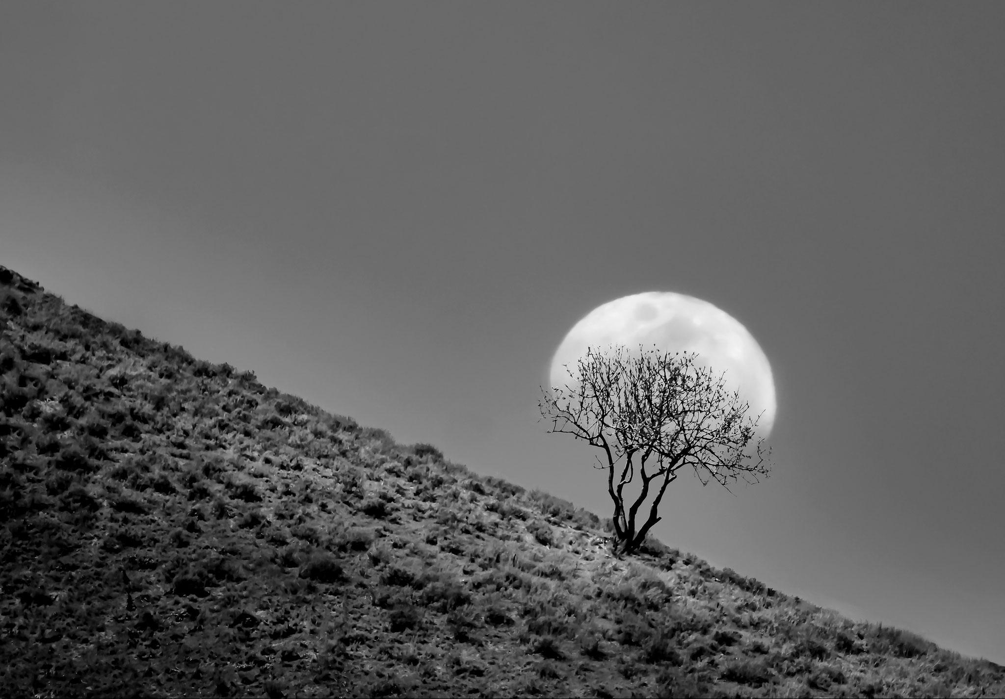 Yarta Younesi (Iran) - The root of the moon