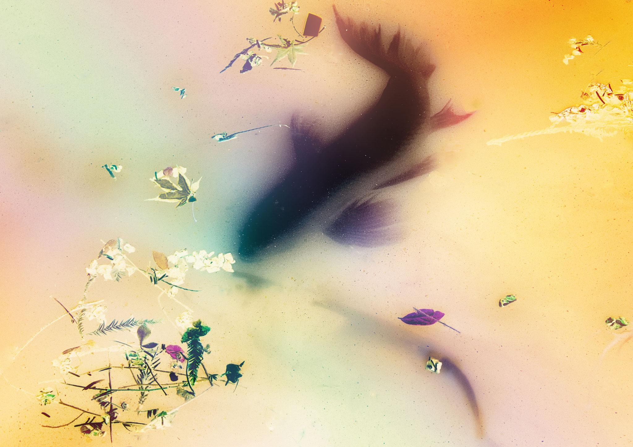 Kato Masami (Japan) -  Dream...