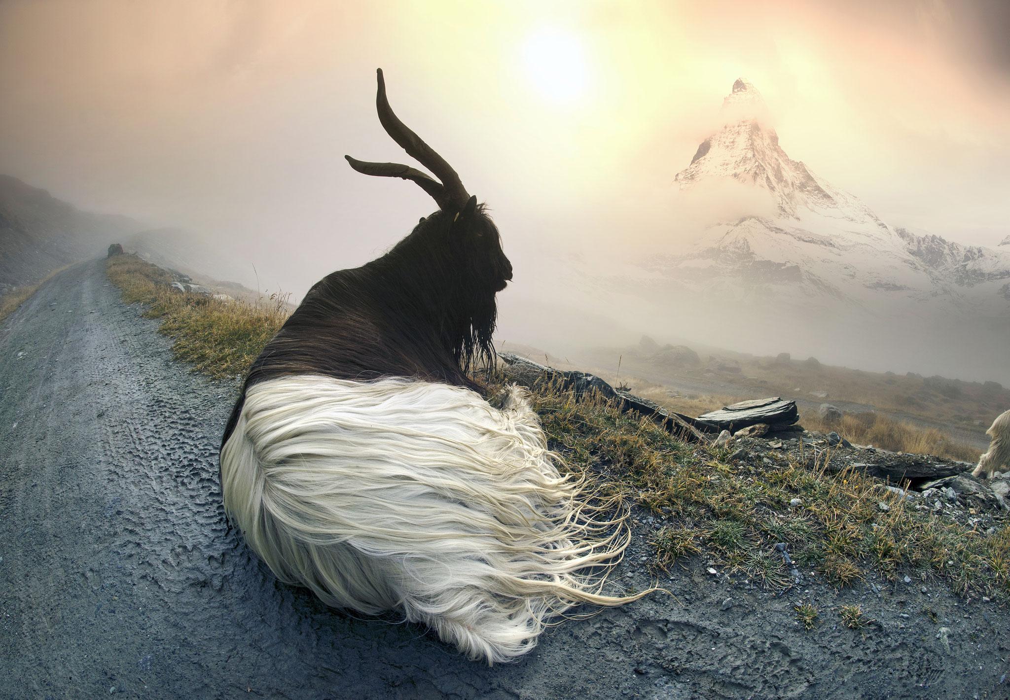 Roman Mykhailiuk (Ukraine) - Matterhorn