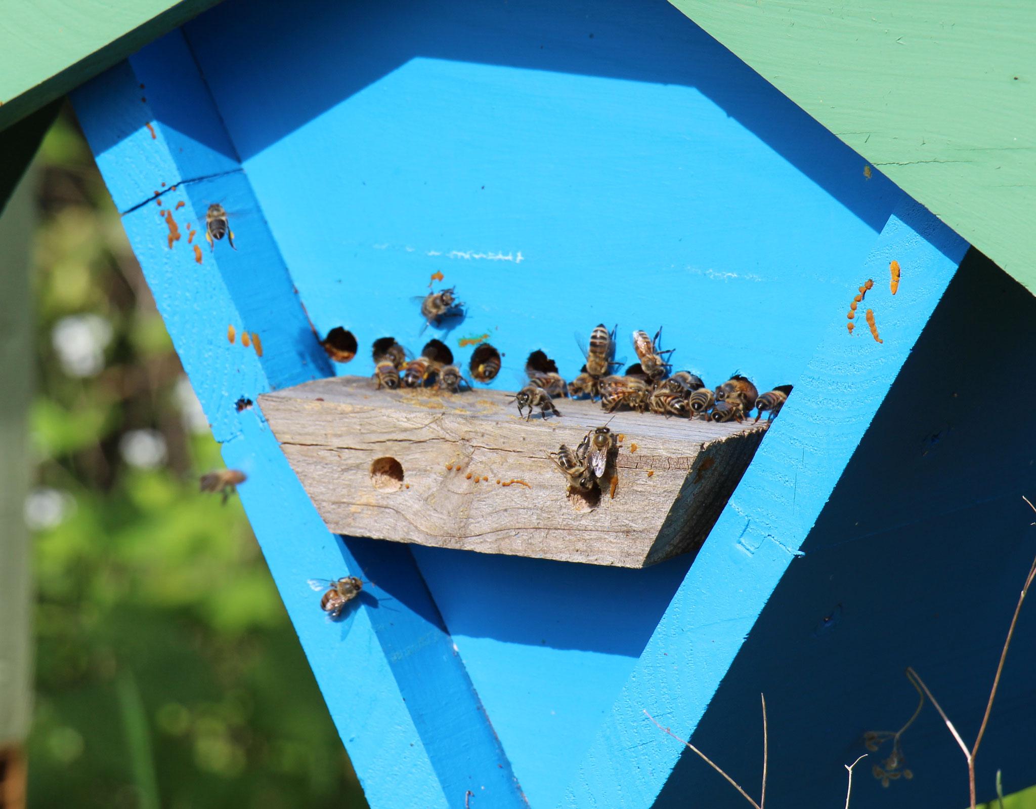 Entrée ruche keyniane