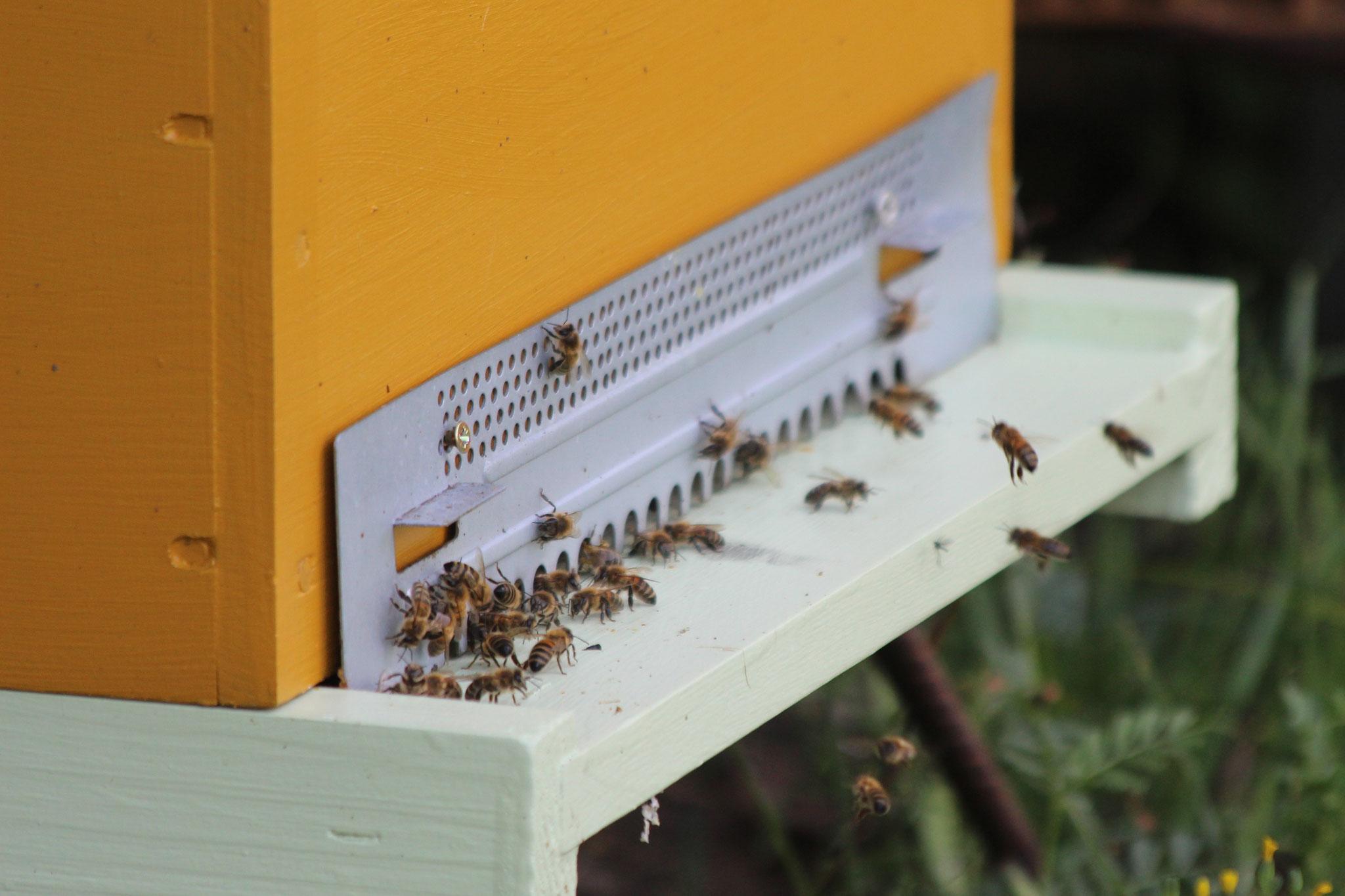 Entrée ruche dadant