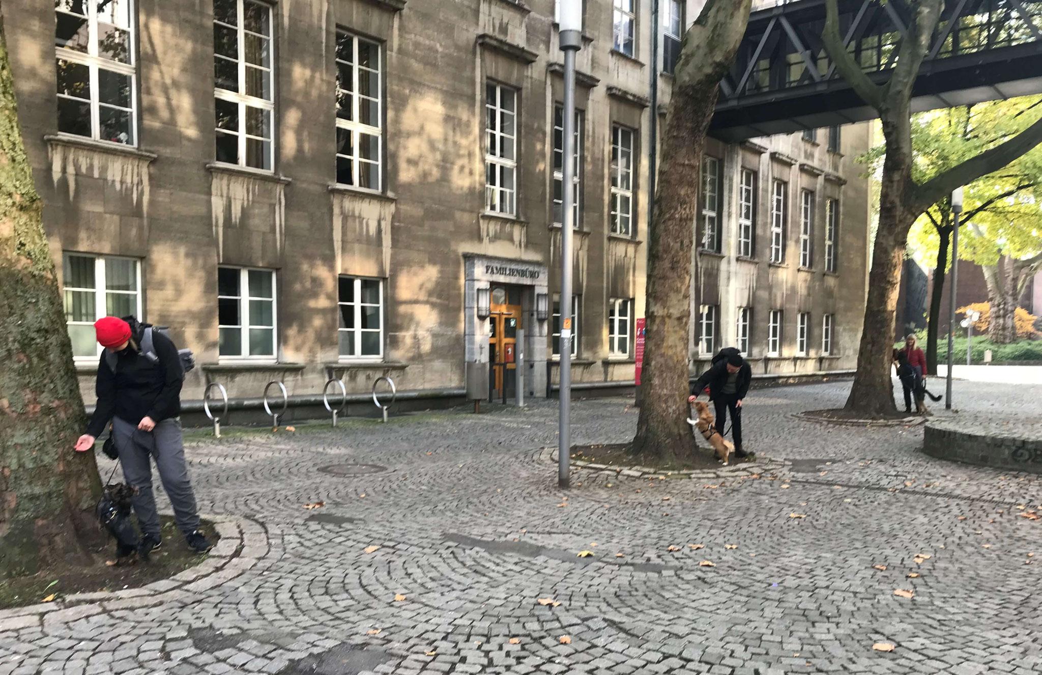 Wildlinge Hundetraining Social Walk Baum