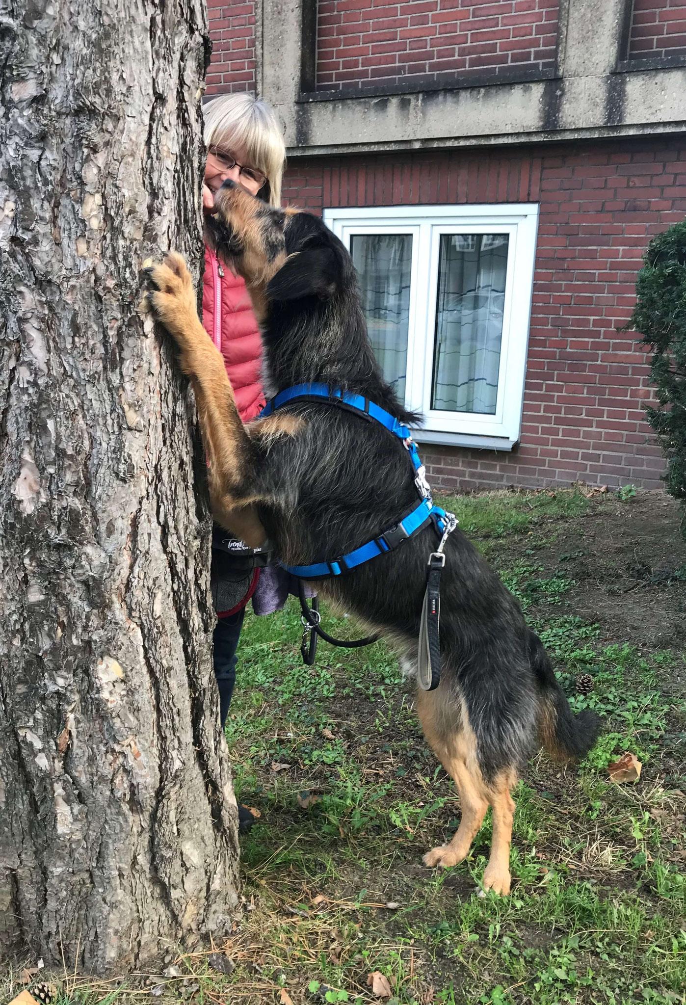 Wildling Teo Baum