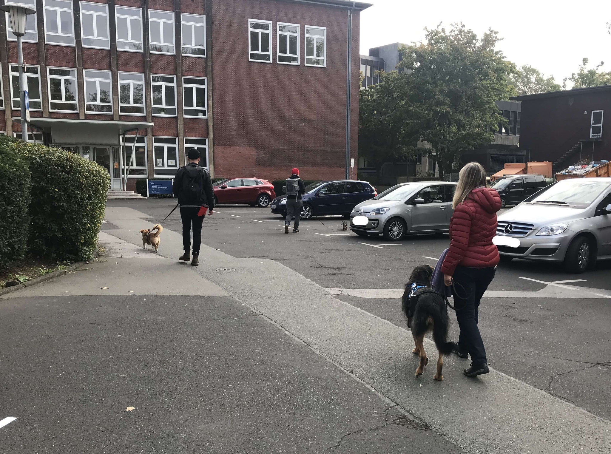 Wildlinge Hundetraining Social Walk
