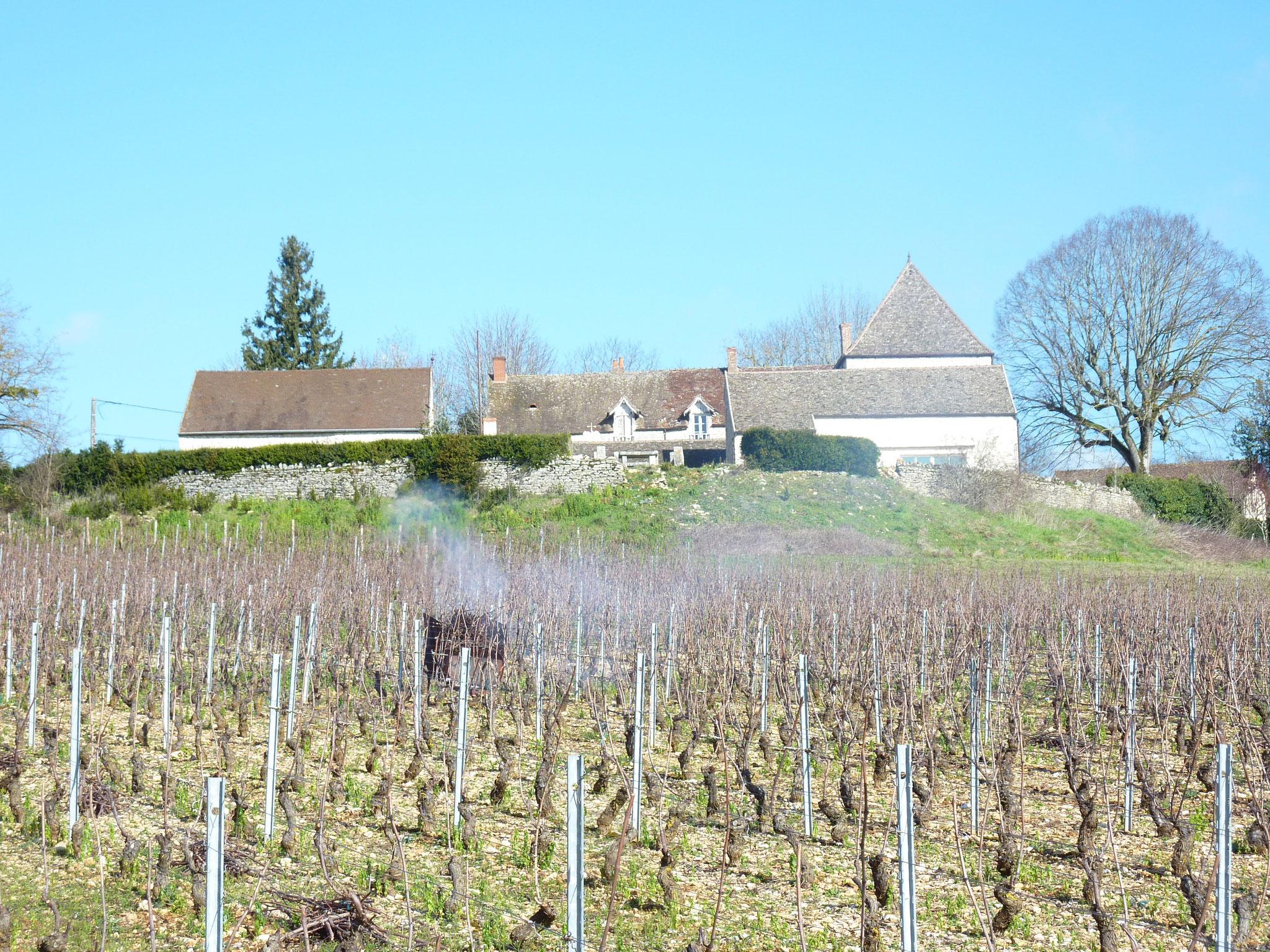 Les vignes de Saint-Hilaire en hiver
