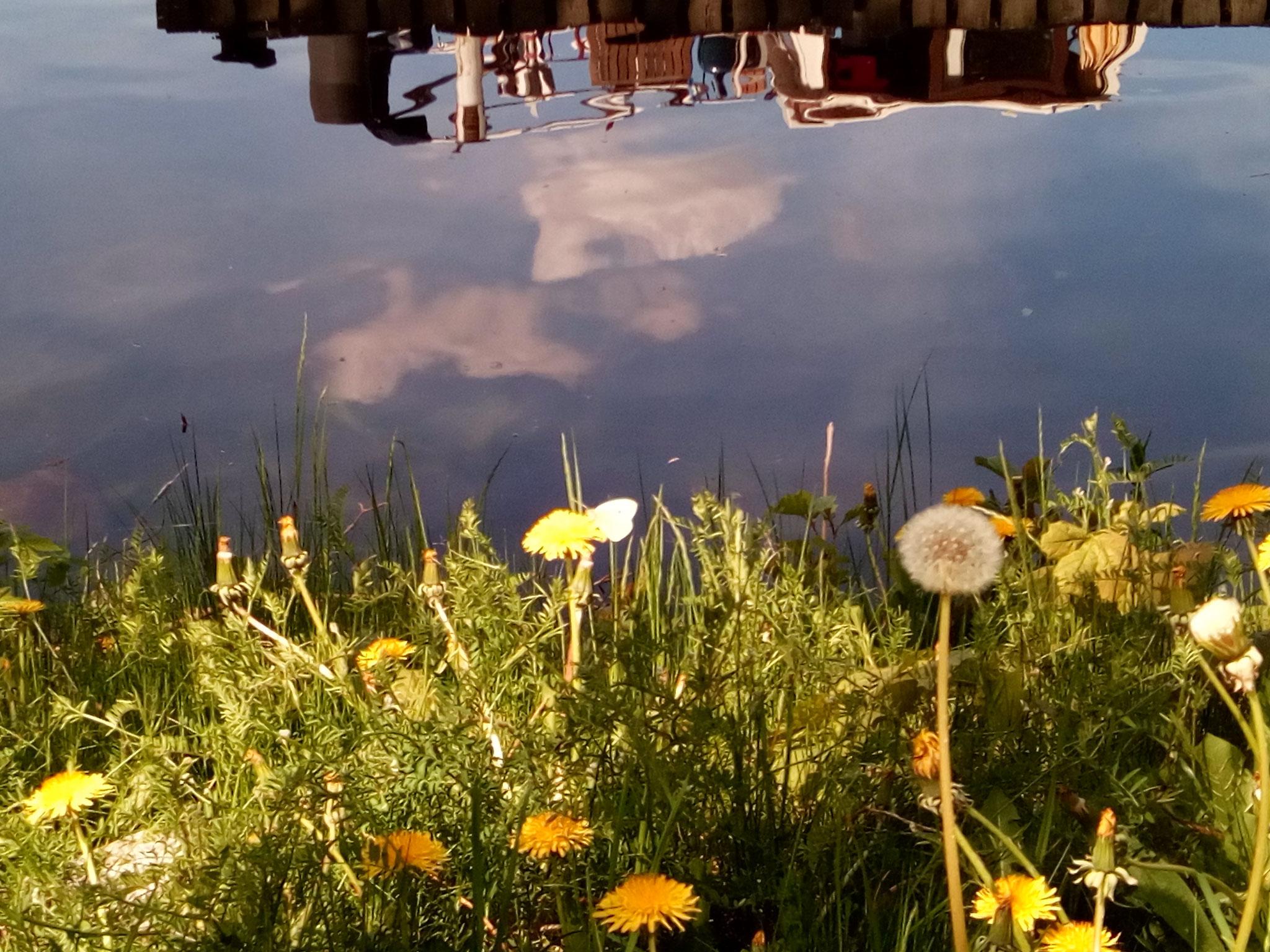 Schmetterlinge, Hummeln und Vogelgezwitscher am Rastplatz Zeitlow