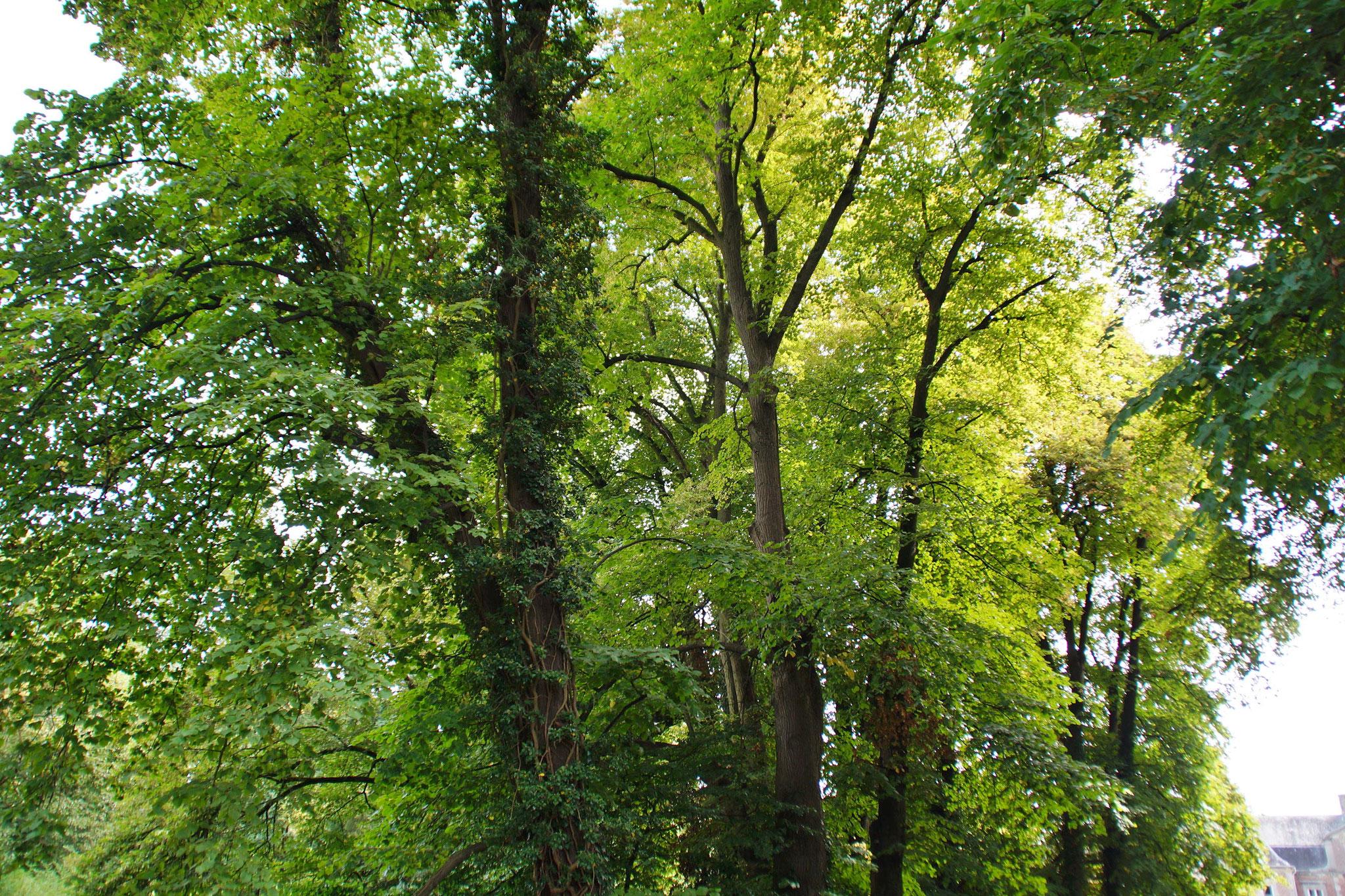 Schöner, alter Baumbestand