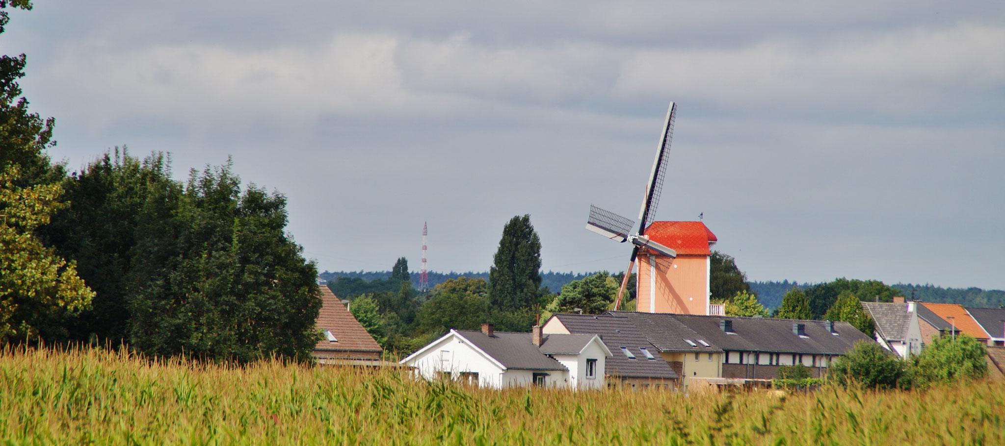 Windmühle bei Leut