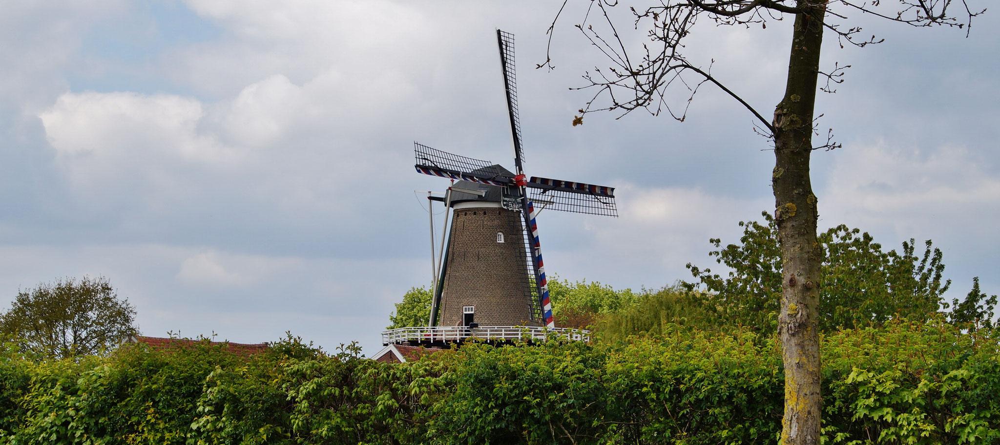 Windmühle vor Stevensweert