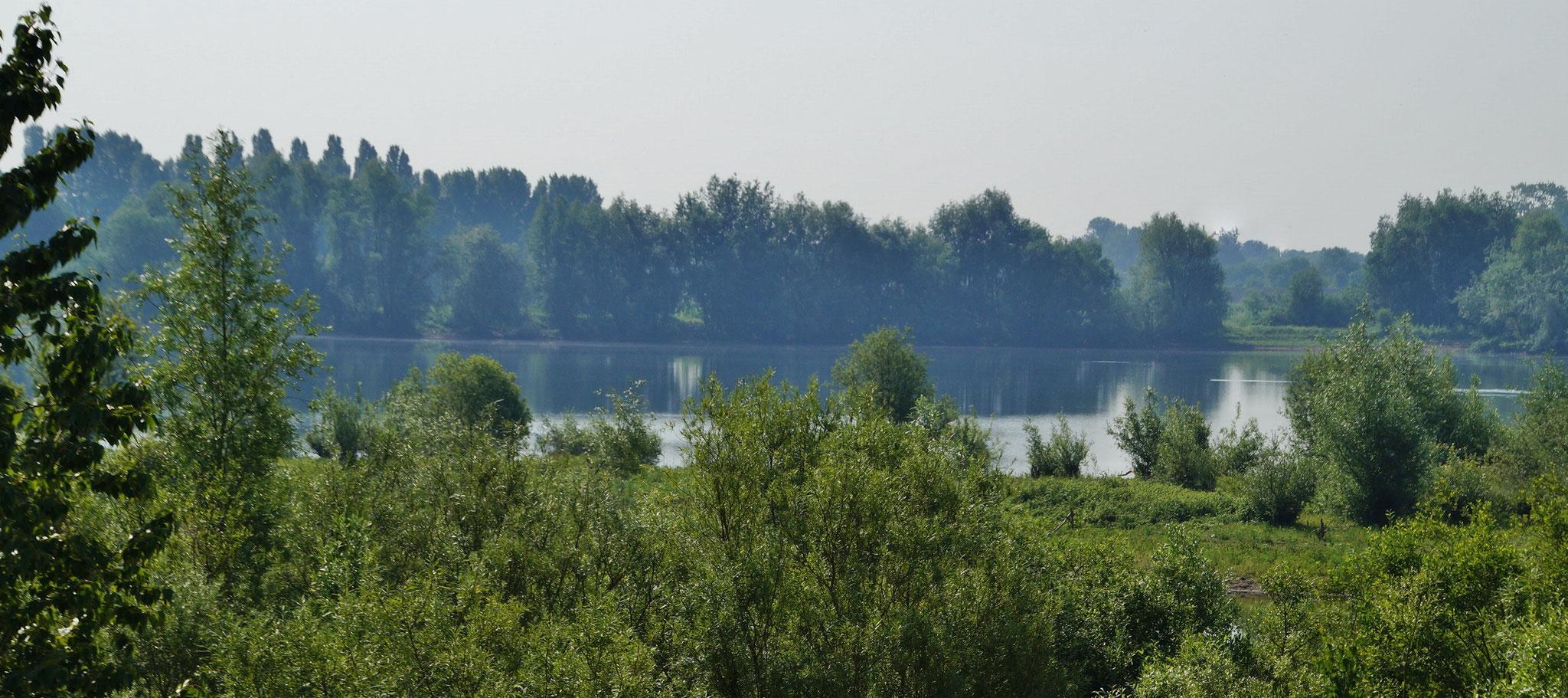 ... ein Paradies für verschiedene Tierarten und Wasservögel