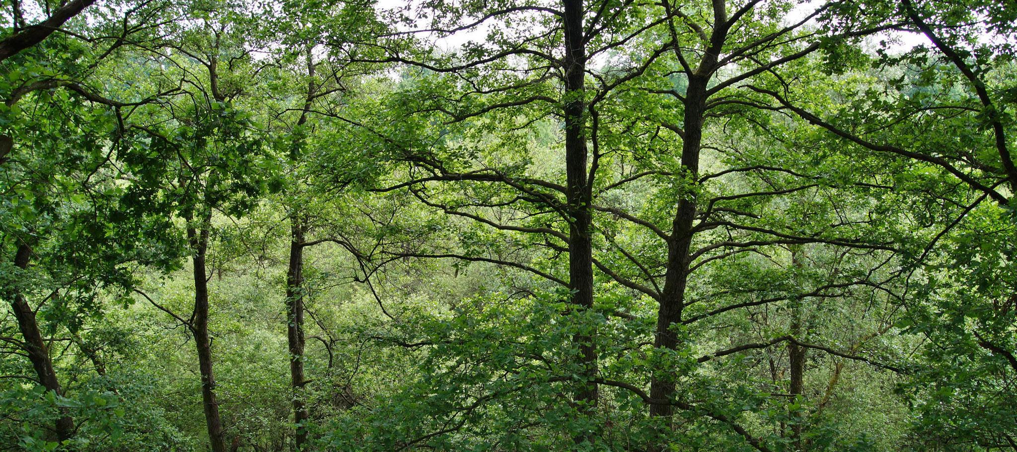 Mit den Bäumen ins Gespräch kommen