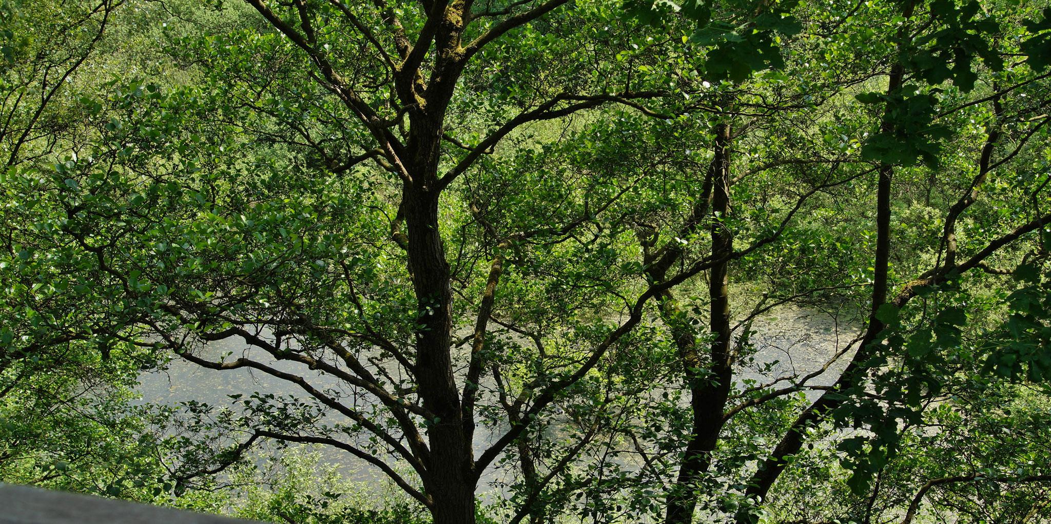 Mitten in den Bäumen