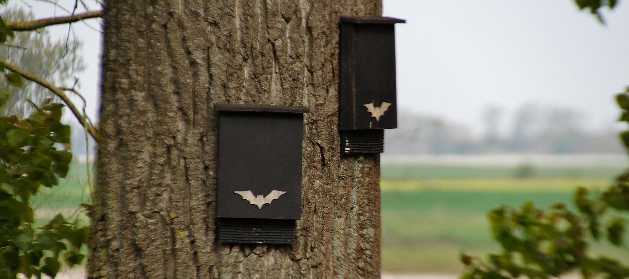 Kästen für Fledermäuse