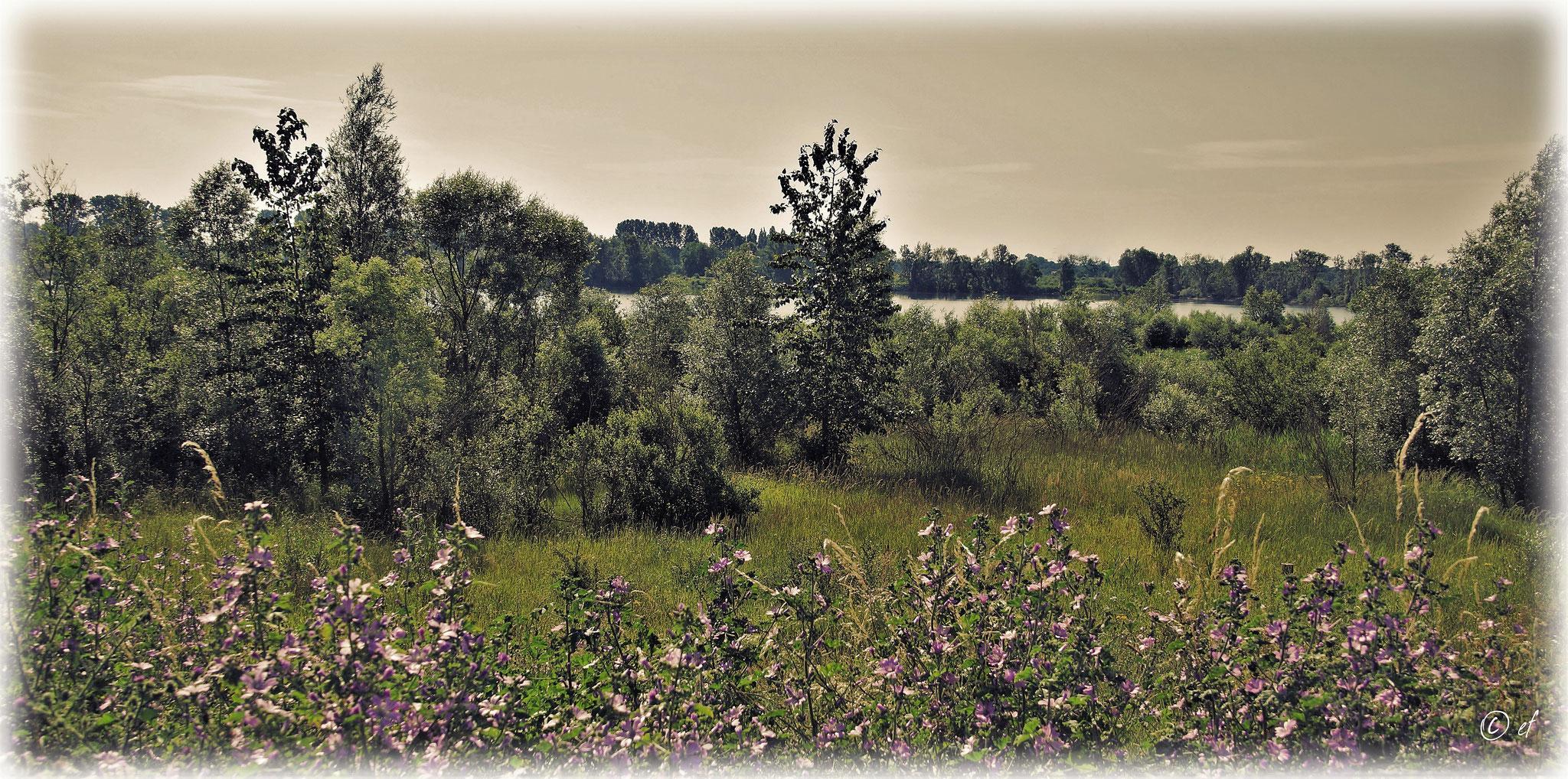 Der Blick Richtung Maas & Auen