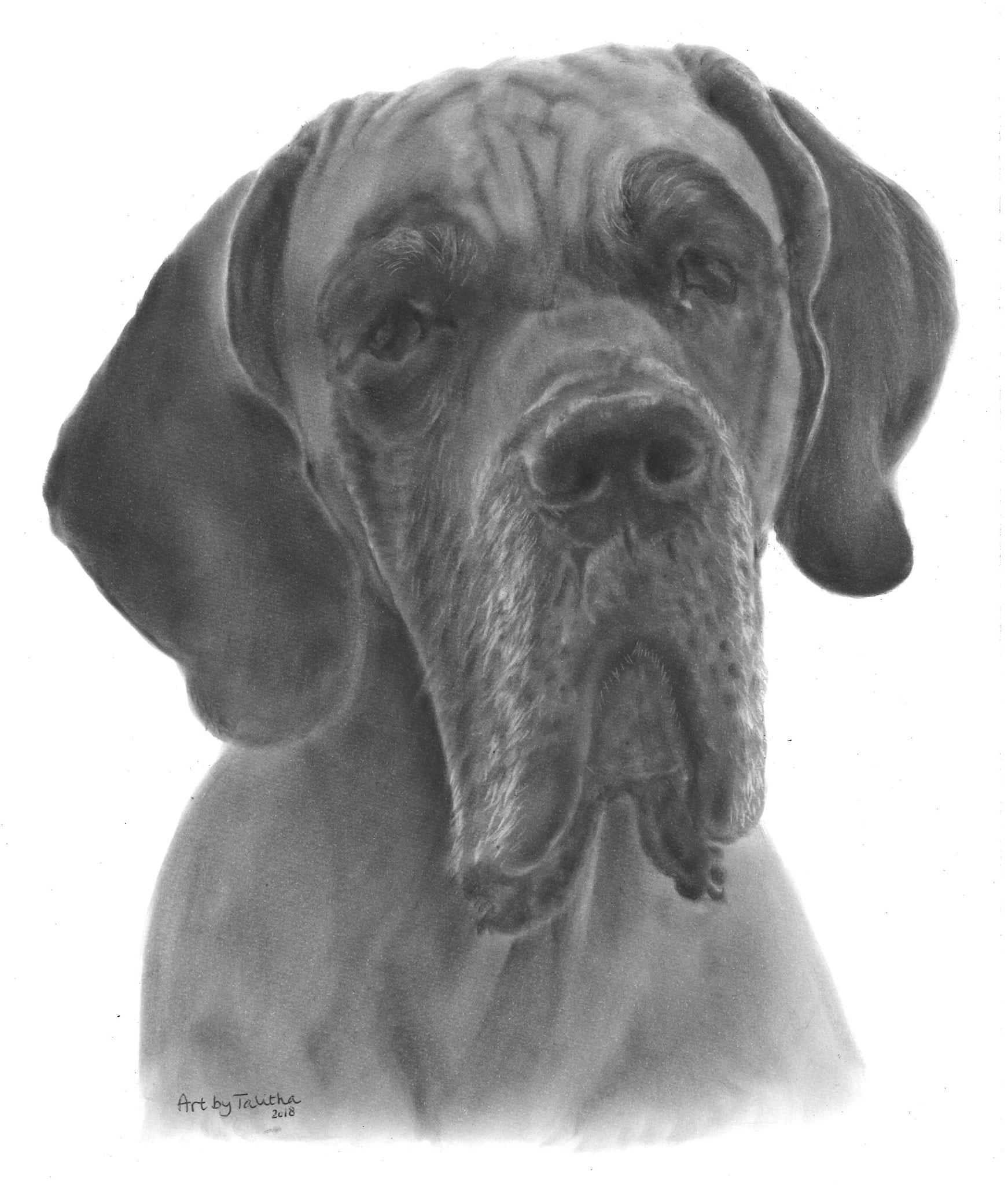 'Jersey de Duitse Dog'