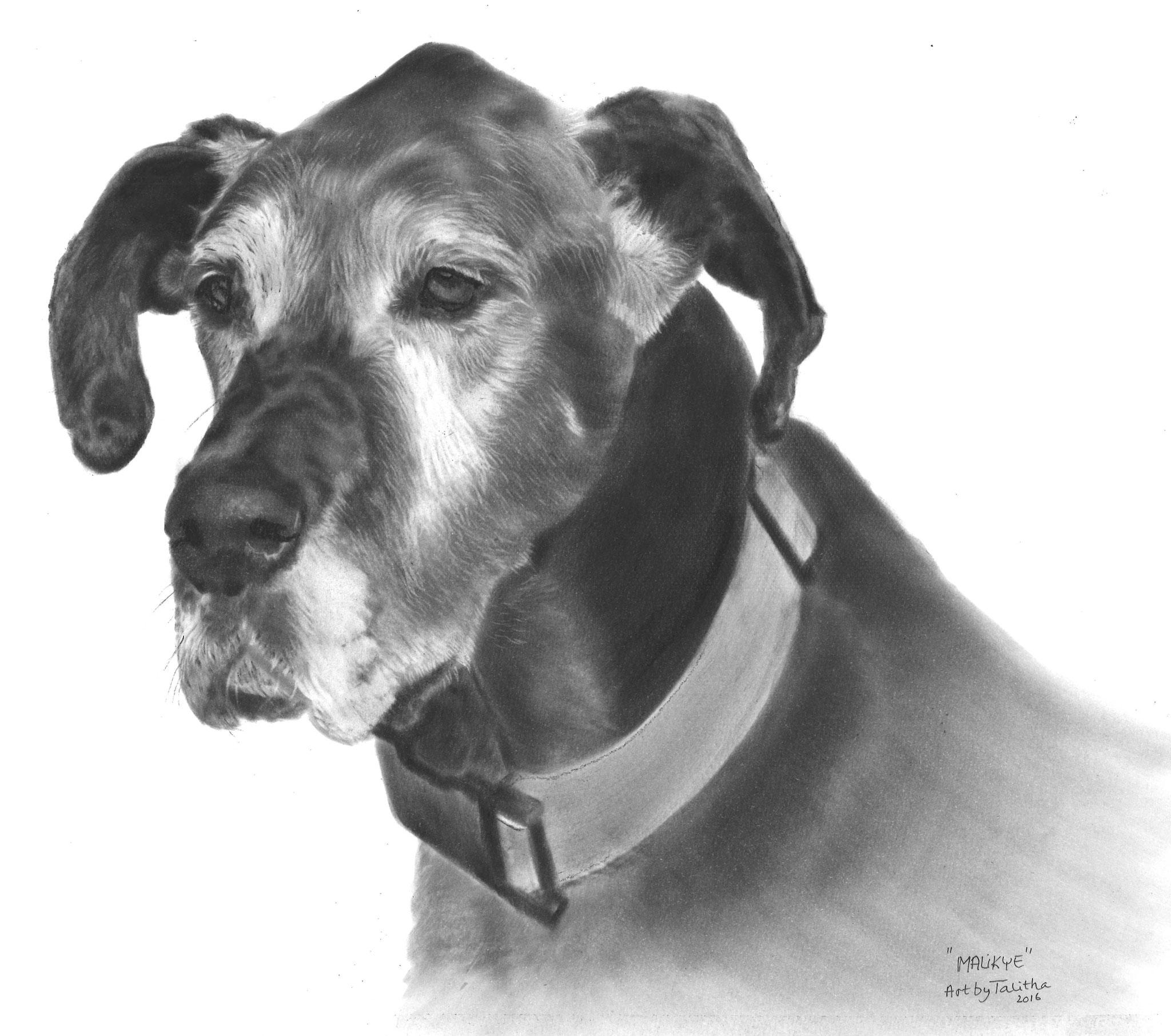 'In liefdevolle herinnering aan Malikye Montana de Duitse Dog'