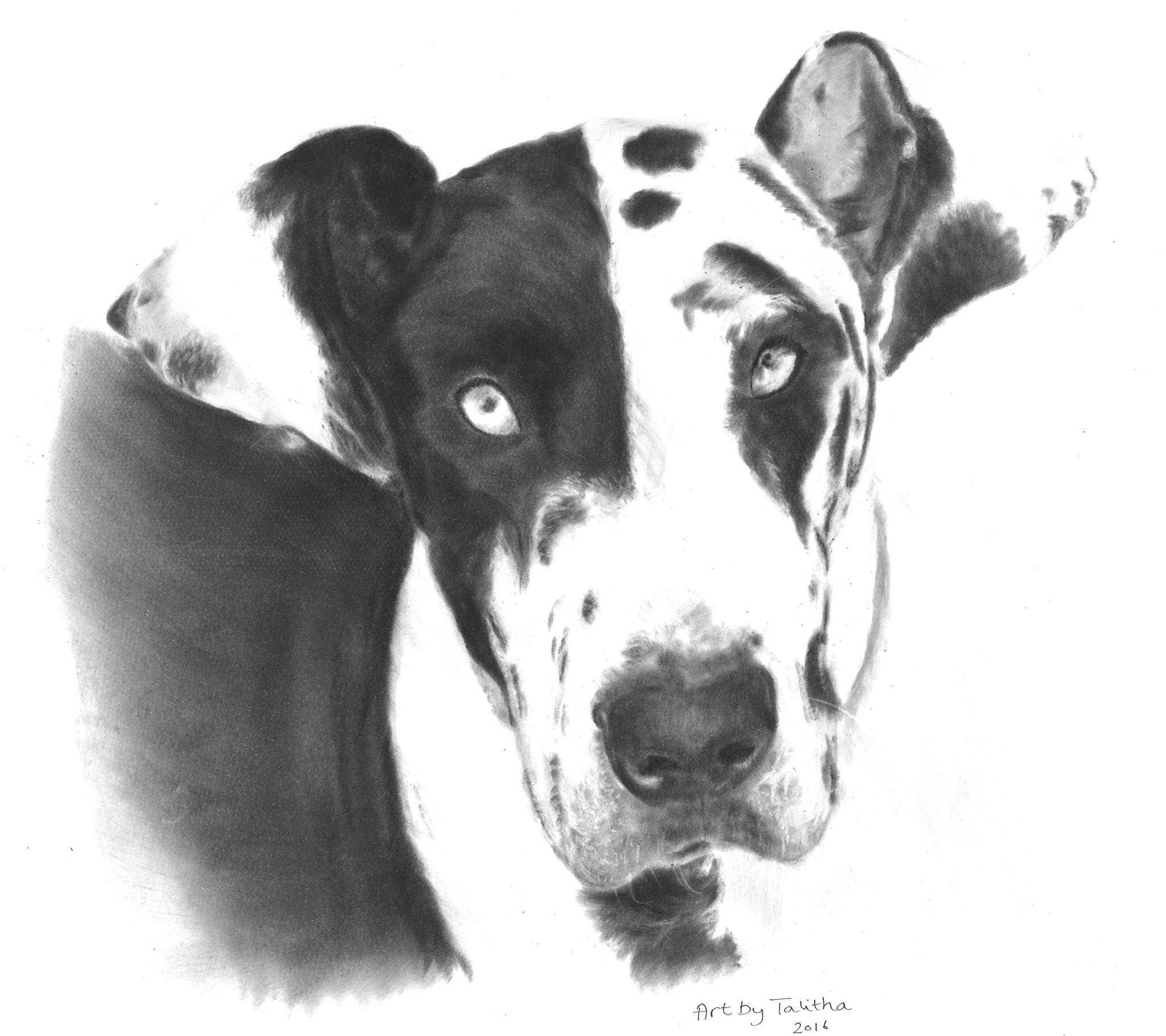 'In liefdevolle herinnering aan Zeva de Duitse Dog'