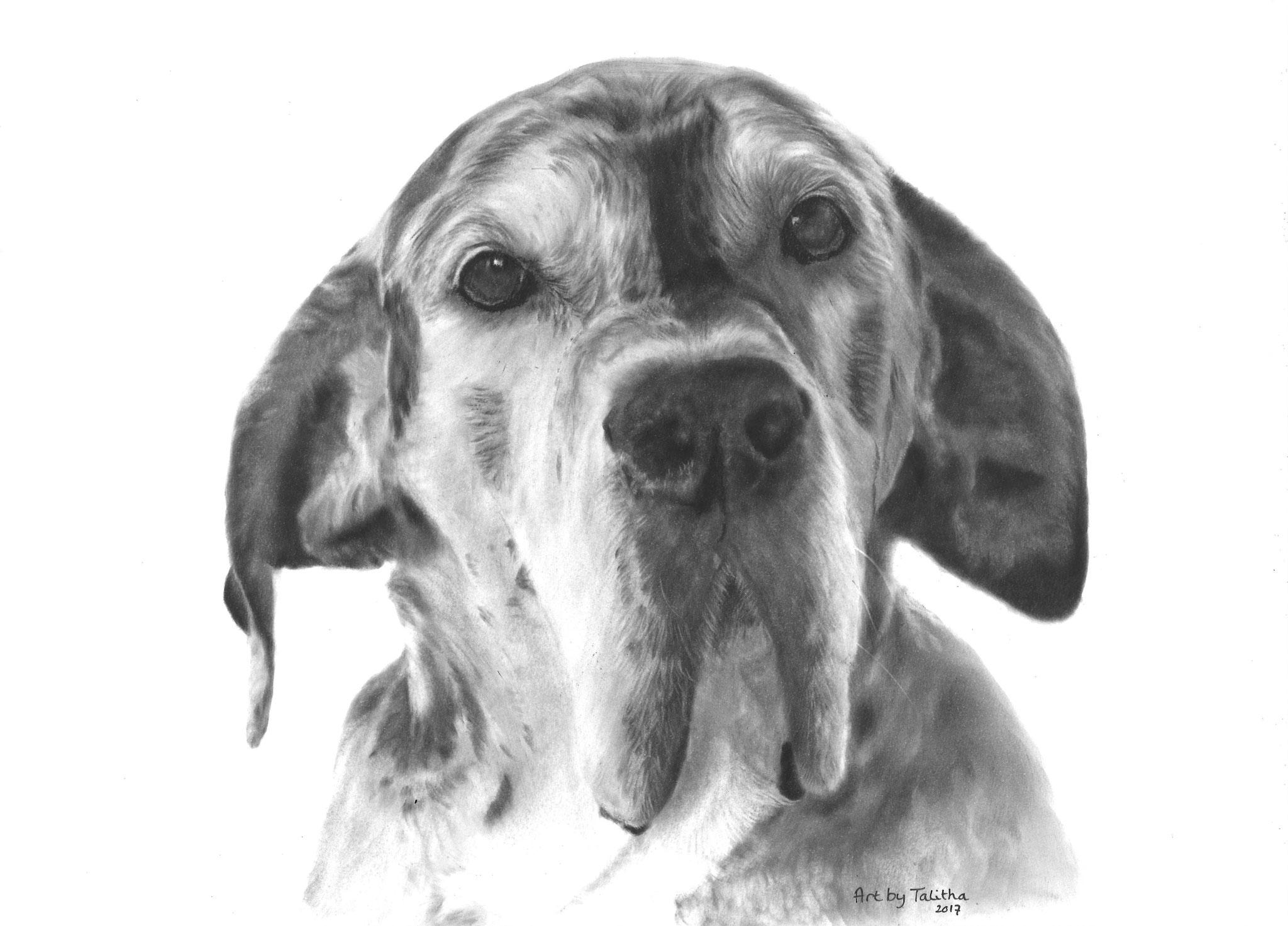'In liefdevolle herinnering aan Fons de Duitse Dog'