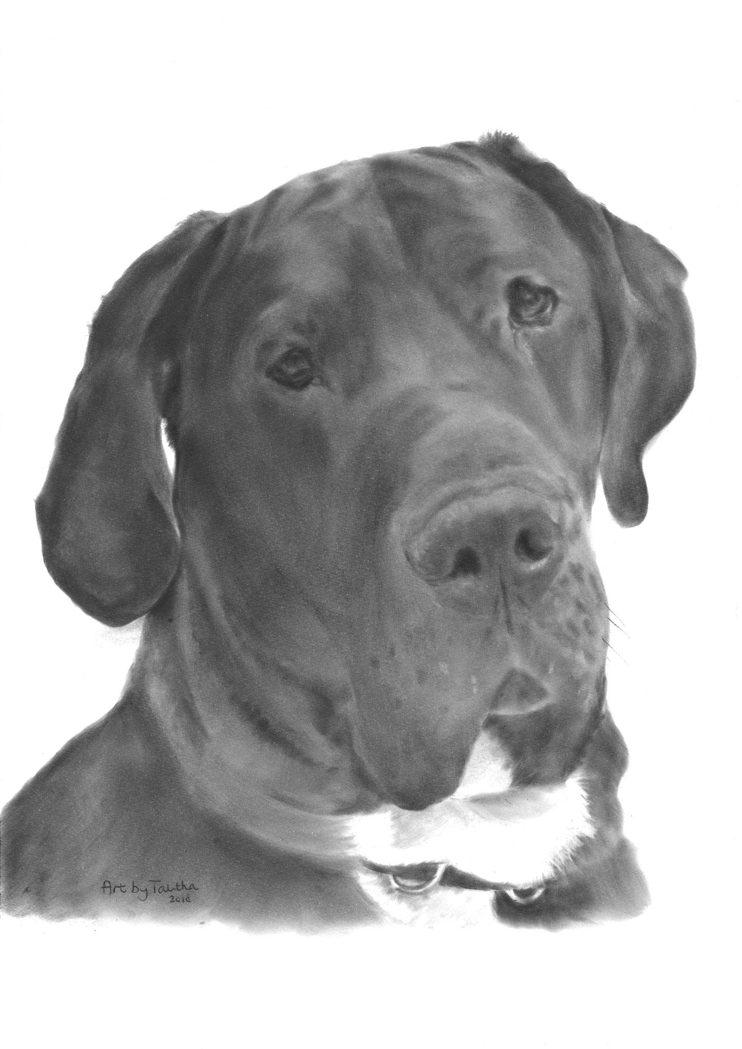 'Tyson de Duitse Dog'
