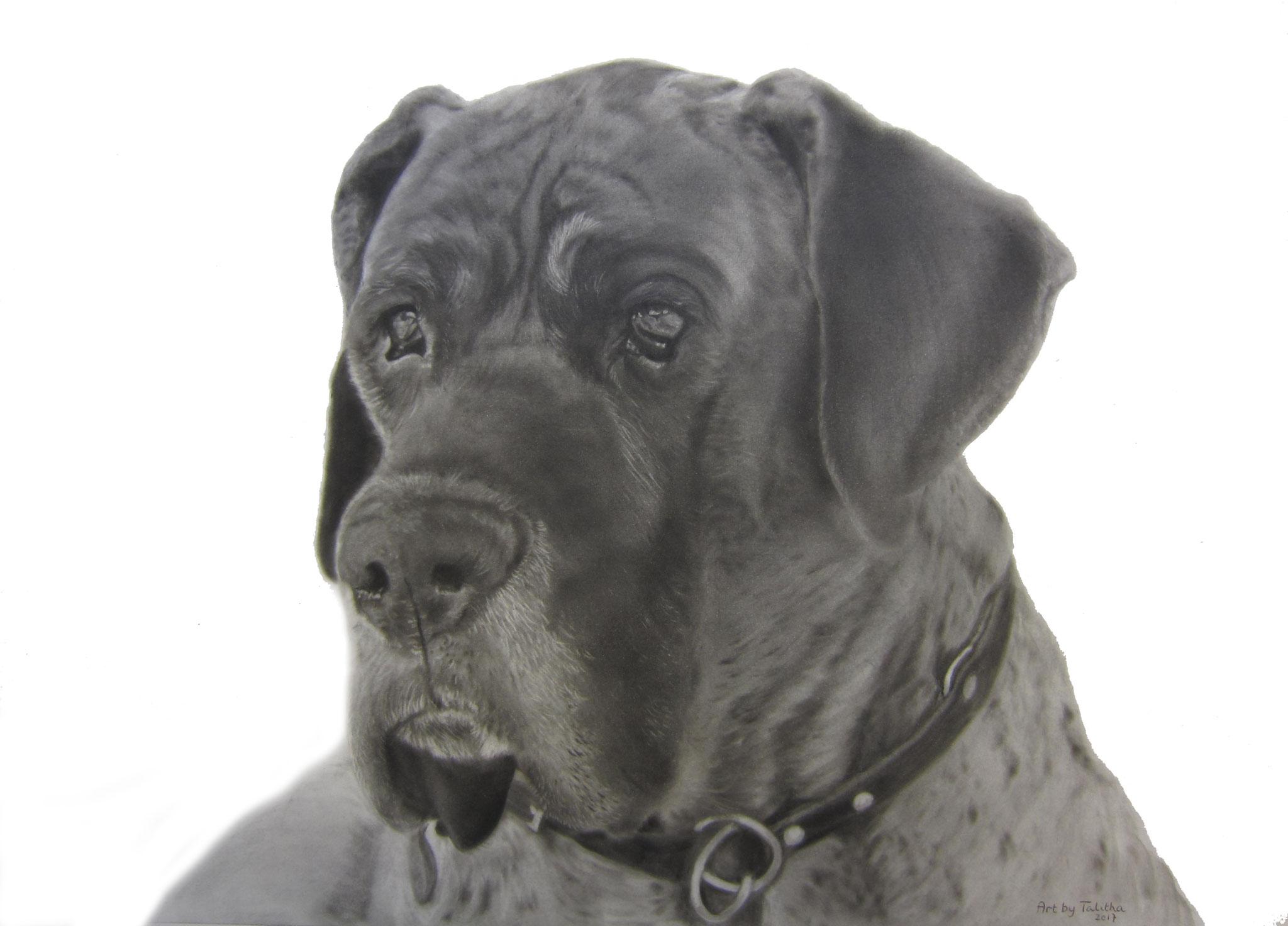 'Jannes de Duitse Dog'