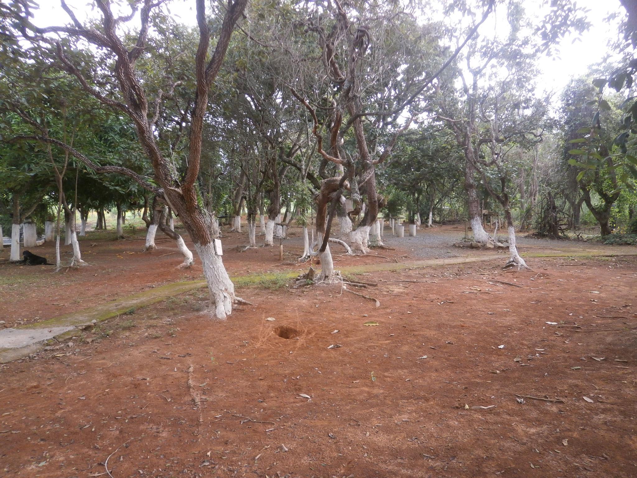 園内の木も従業員が熱心過ぎるほど?手入れが行き届いています。