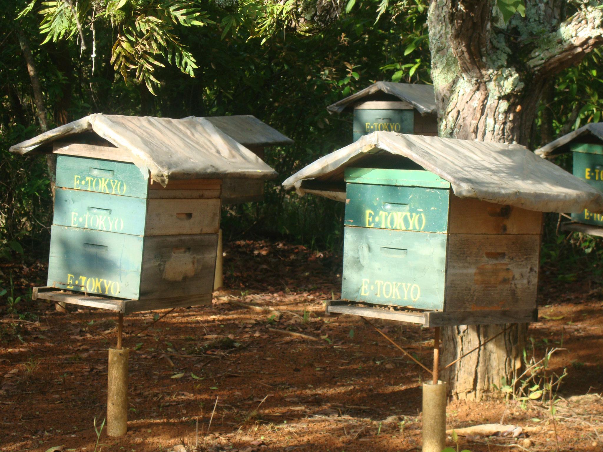 設置してある巣箱。日照りが続いてもミツバチは健気に働いています。