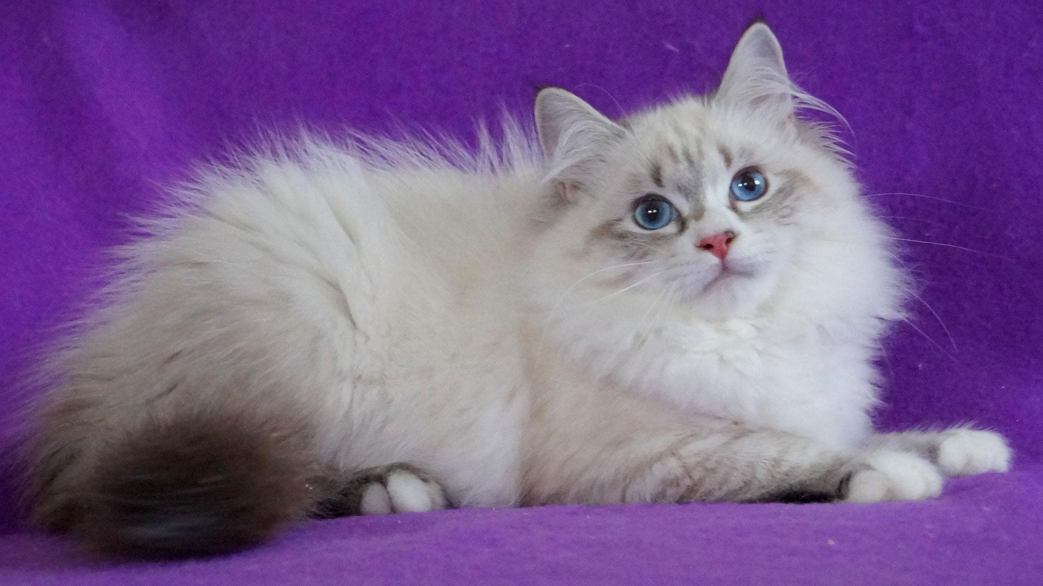 Эдит, кошка, n 03 21 33, доступна