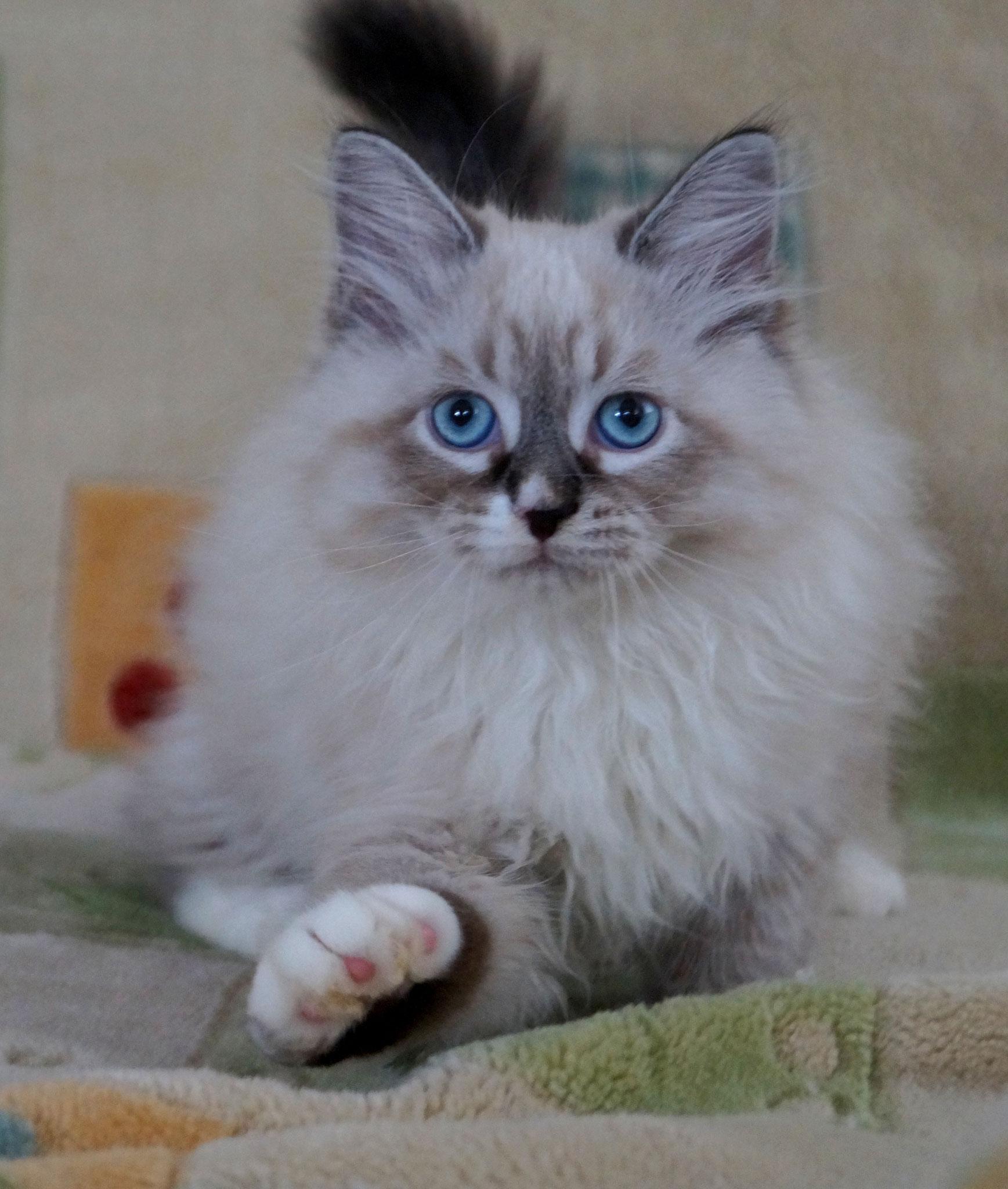 Амулет, кот, n 092133, зарезервирован
