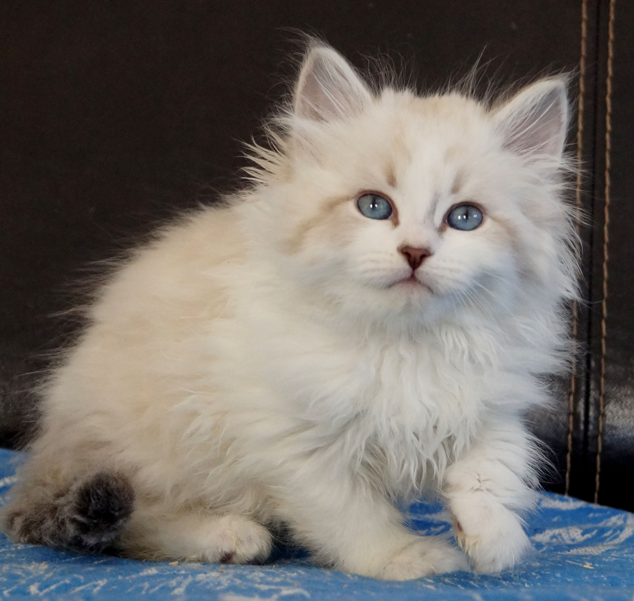 Силантий, кот, а 21 33 03, продан