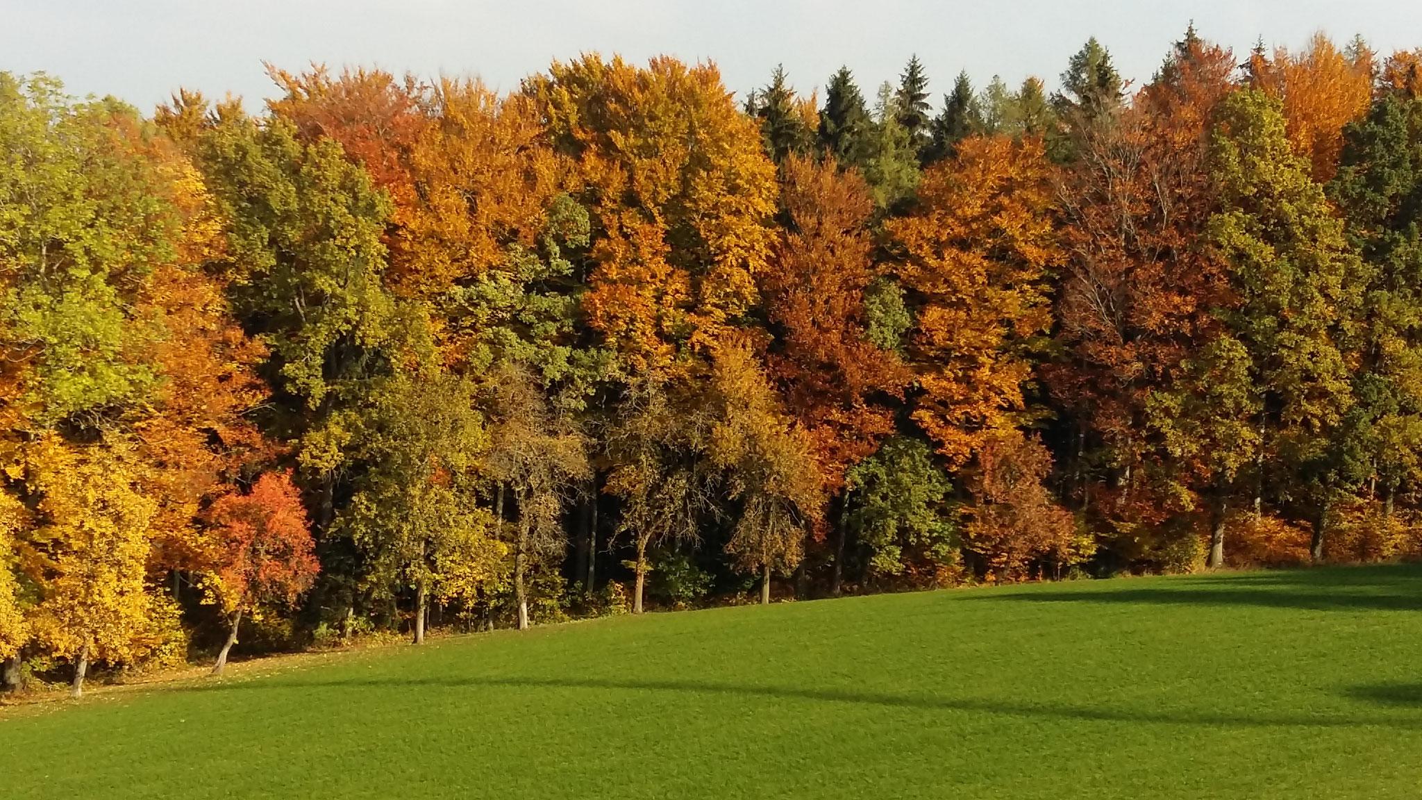 Herbststimmung im angrenzenden Wald
